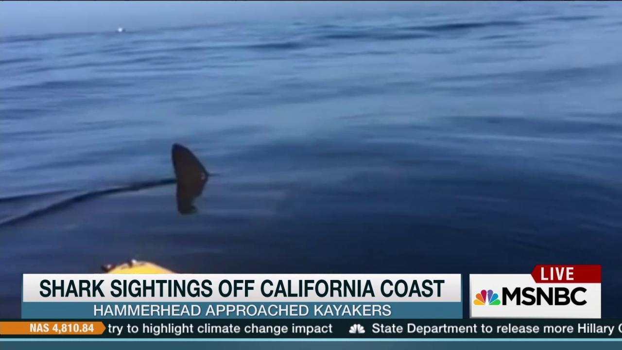 Shark sightings shut down California beach