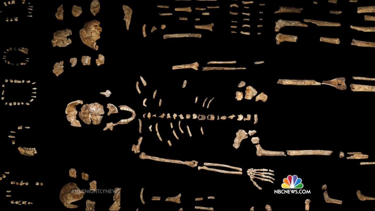 Scientists Reveal Homo Naledi, Our 'Unprecedented' Newest Cousin