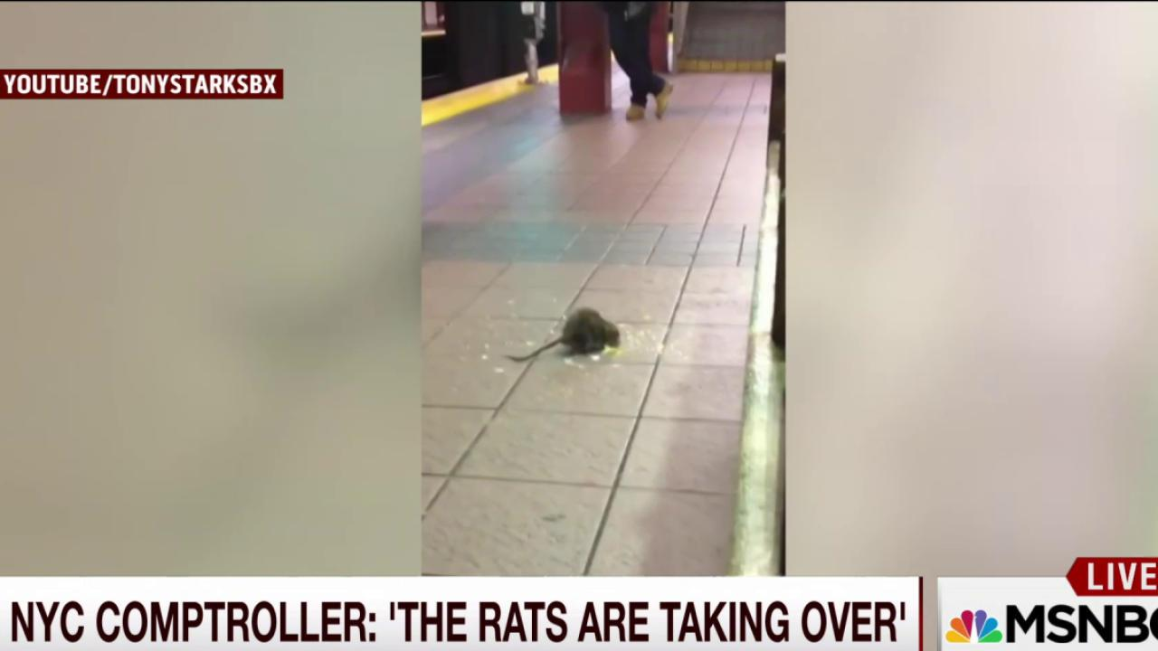Rats are taking over NYC, says city official