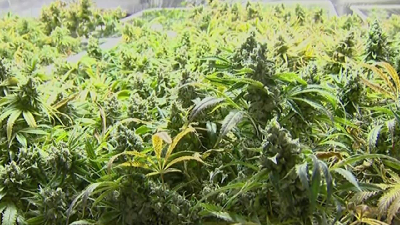 Ohio to vote on legalizing marijuana