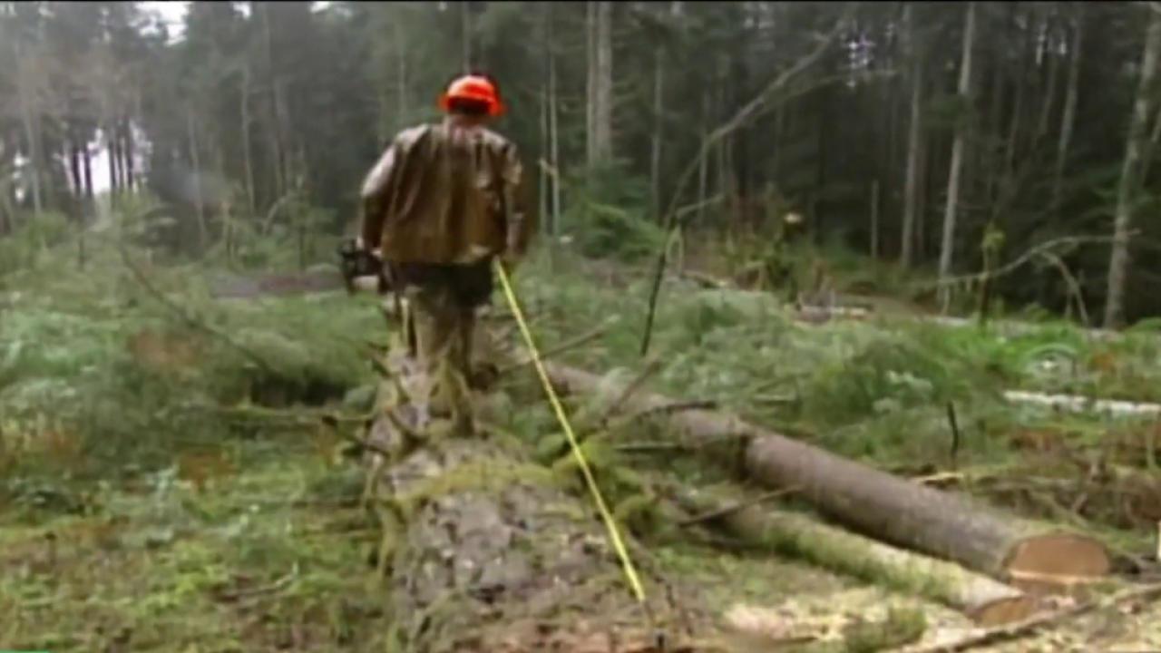 How the export wood pellets export is harmful