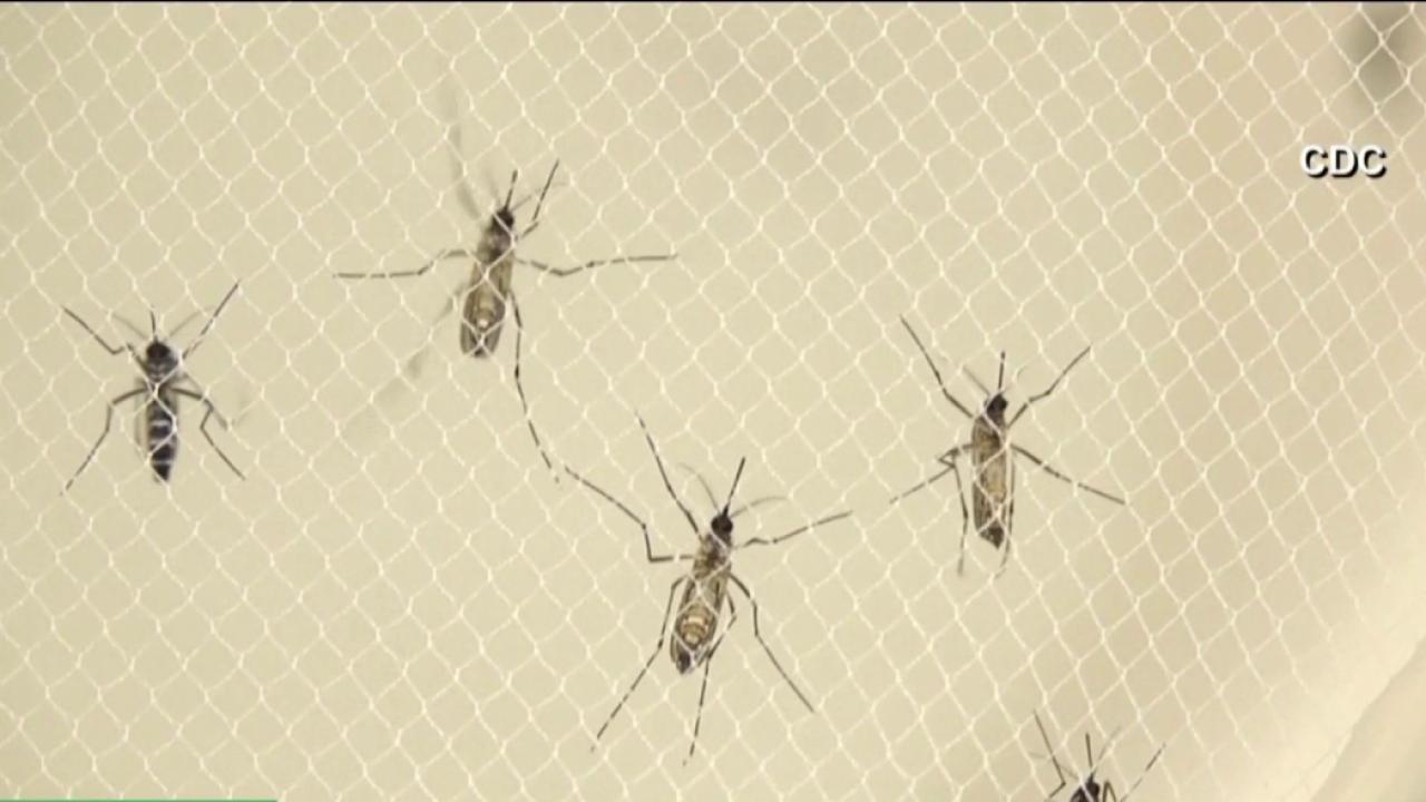 The connection between Zika and warm weather
