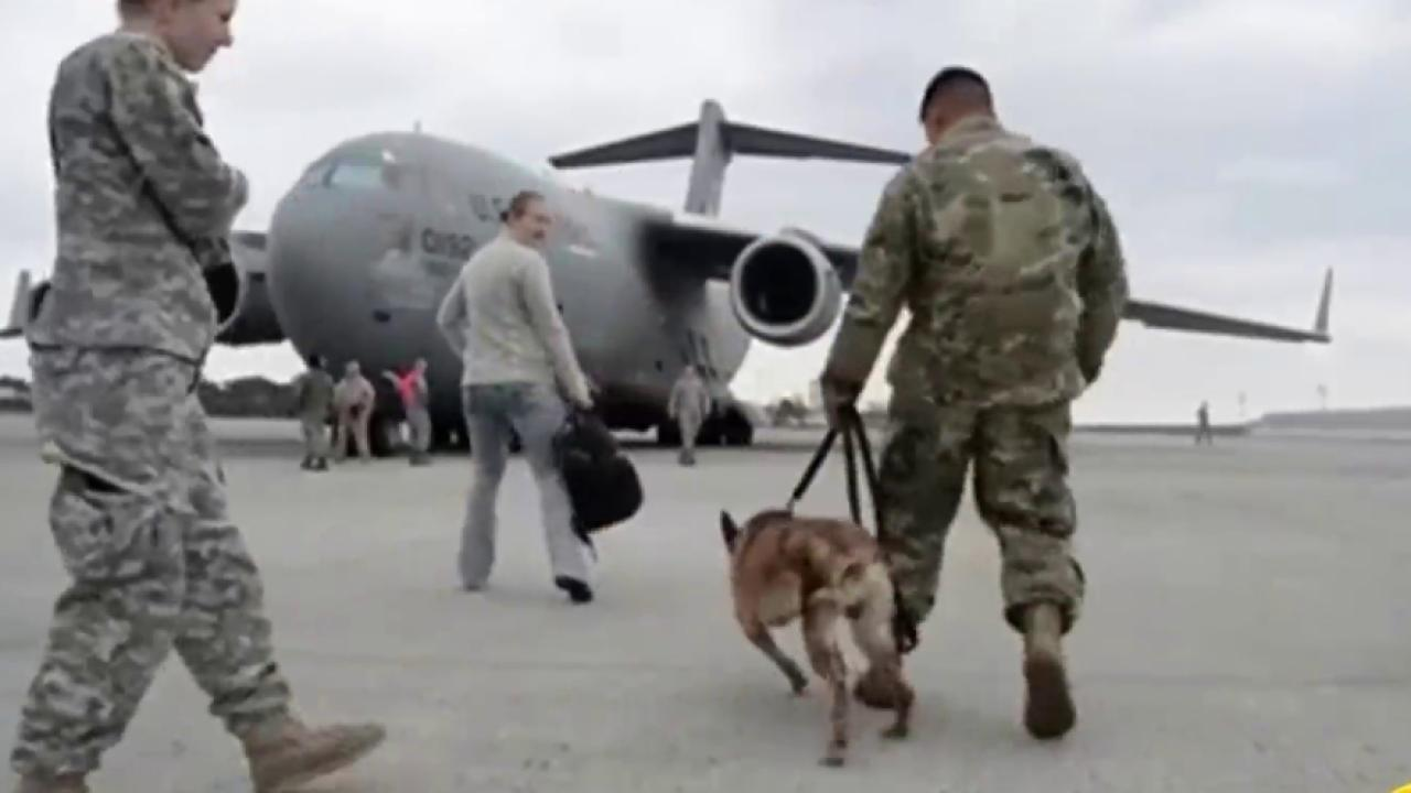 Wounded military dog Rocky reunited with his veteran dog ...