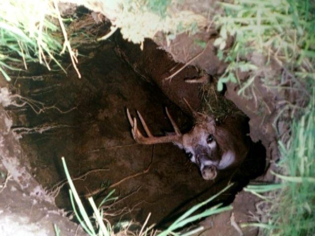 Farmers Rescue Stranded Deer From Sinkhole