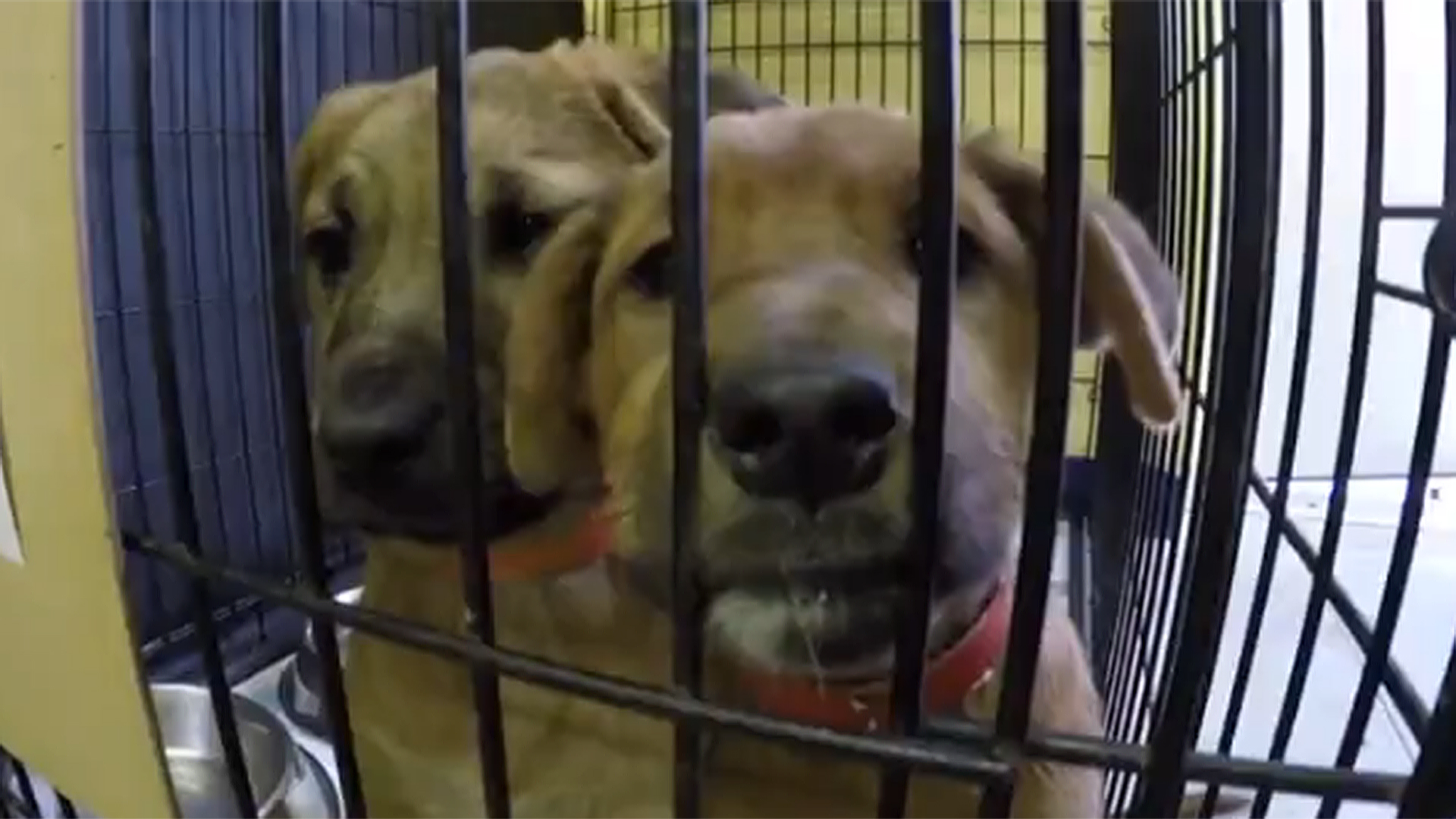 Kentucky Dogs Rescued