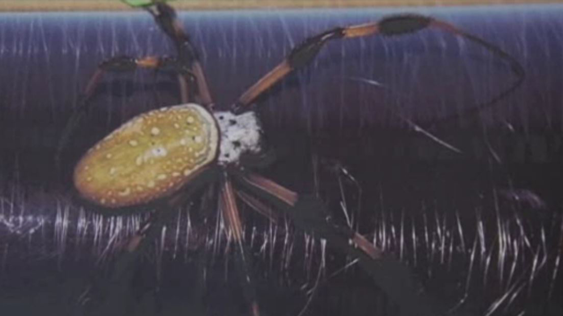 Sea Snail Teeth Top Spider Silk as Strongest Material on Earth