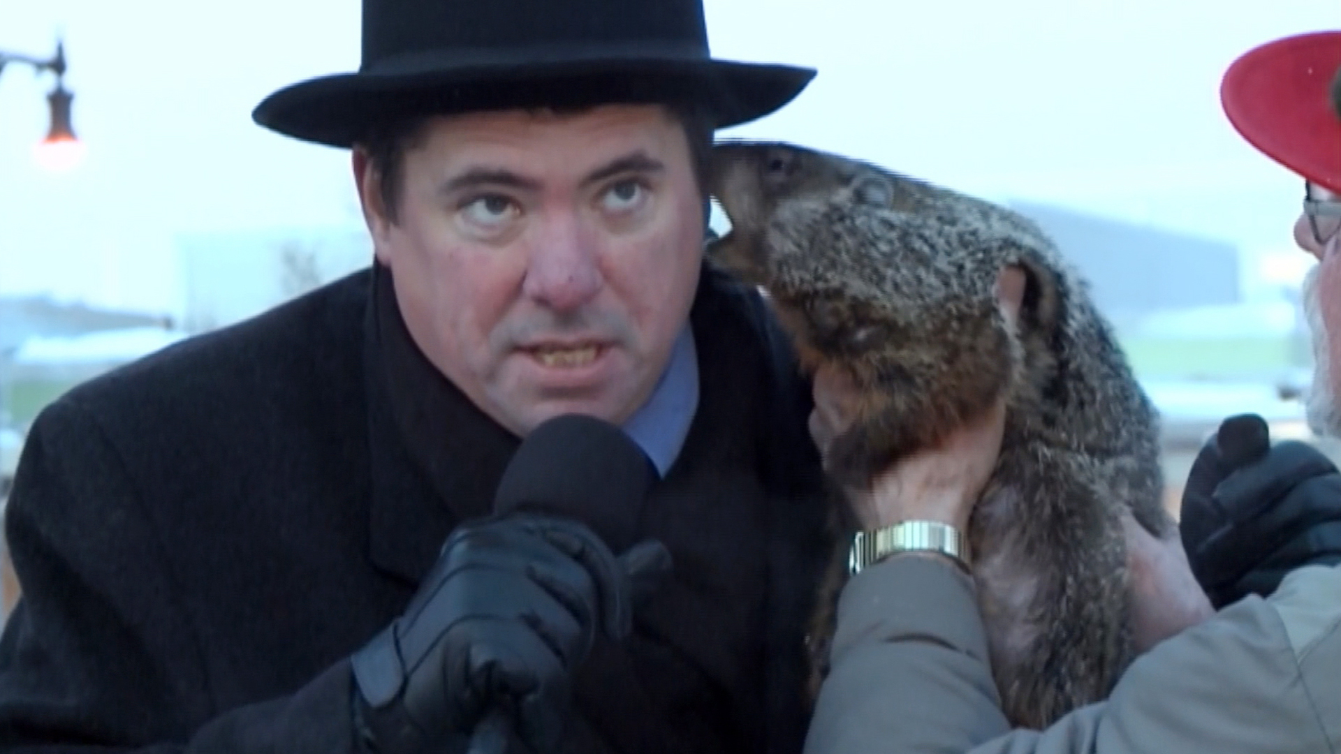 Image result for groundhog at zoo bites ear
