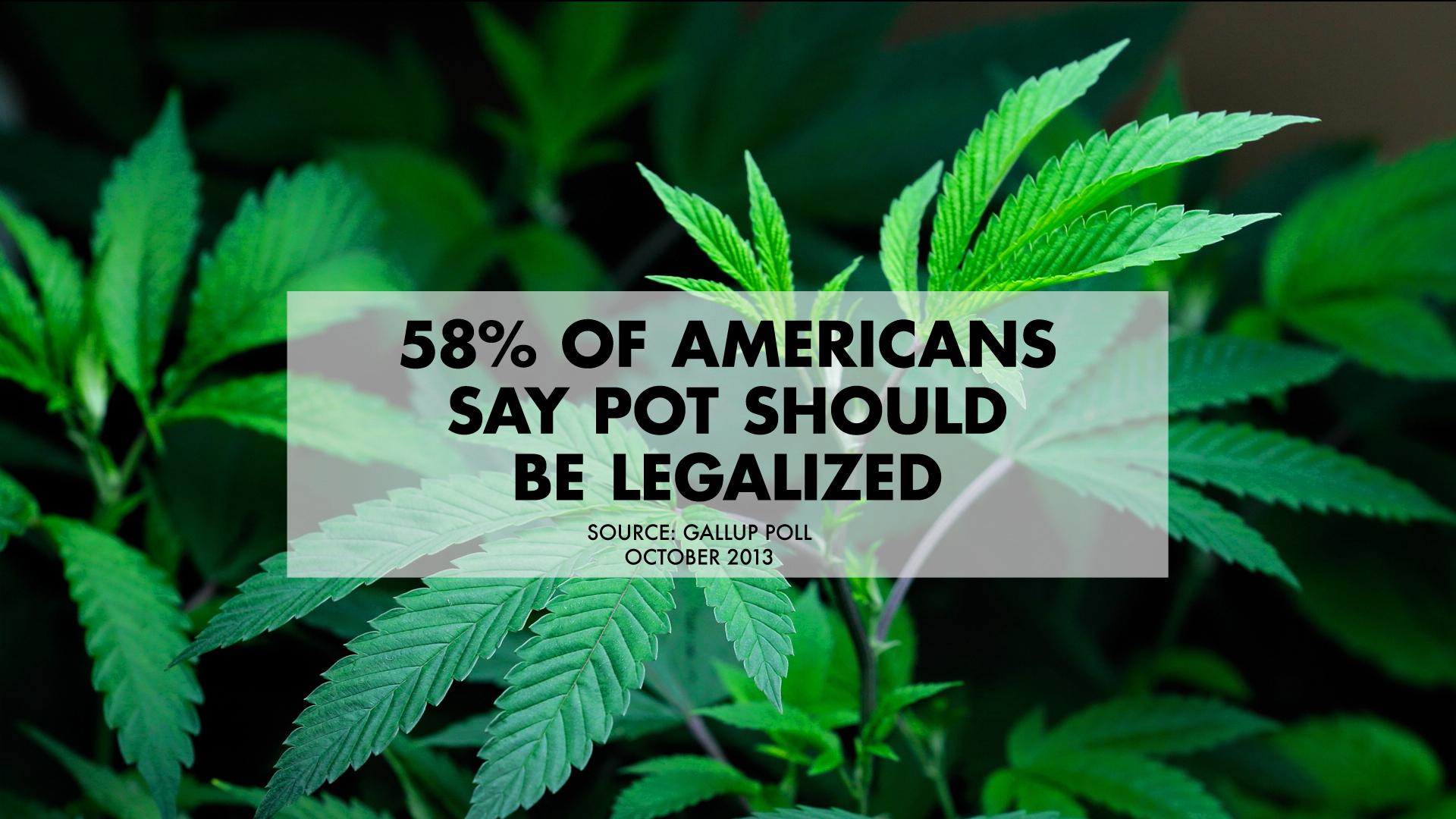 marijuana should be legalised today Why marijuana should be legal, and expensive marijuana is becoming more mainstream: after today's massacre in texas.