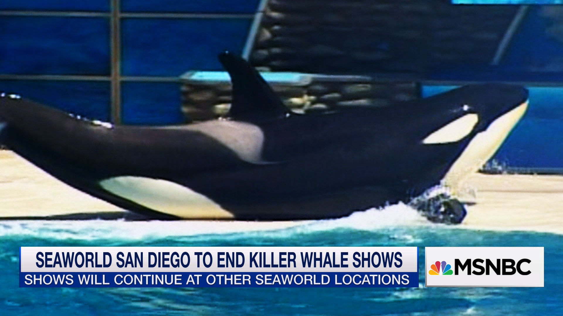 Is the end of killer whale shows enough?