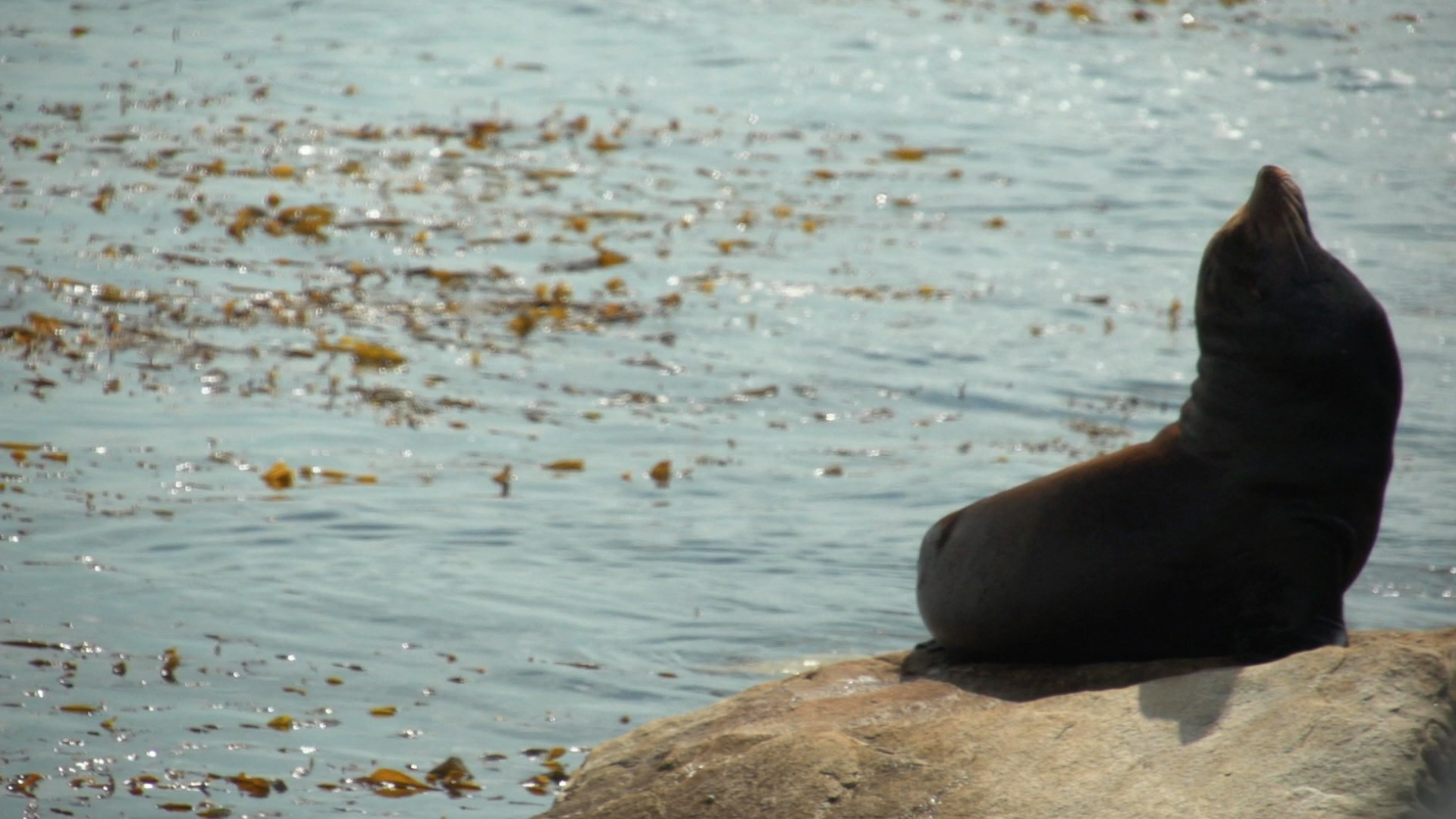 Sea Lions in record-high danger