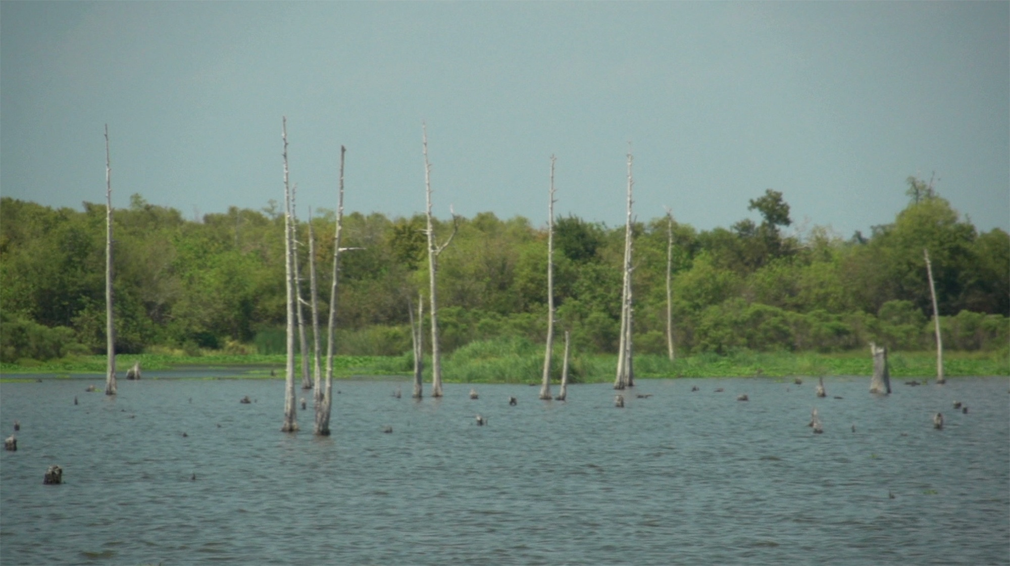 Meet the group restoring Louisiana's Wetlands
