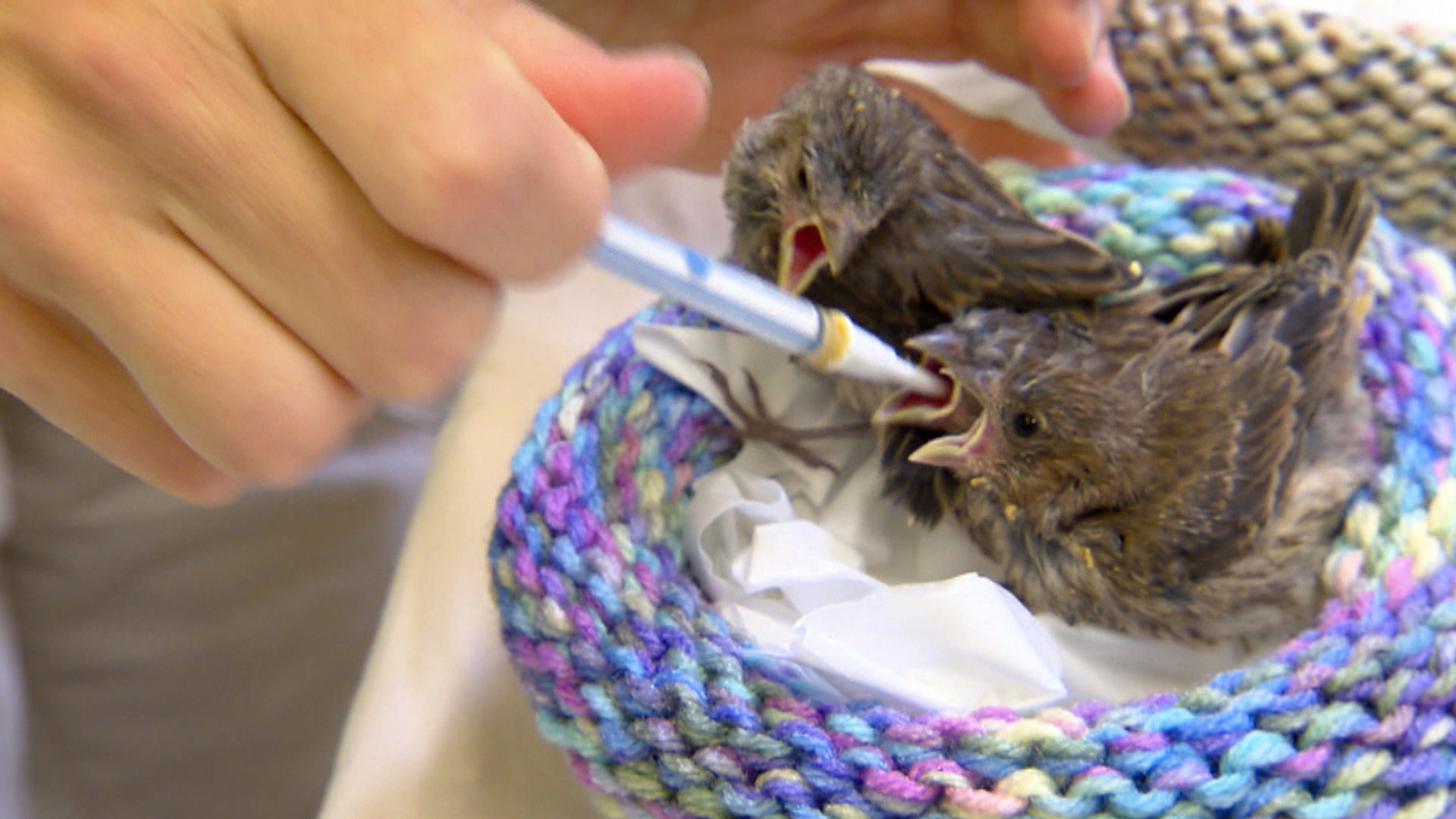 Knitted Nests Help Birds Give Flight - NBC News