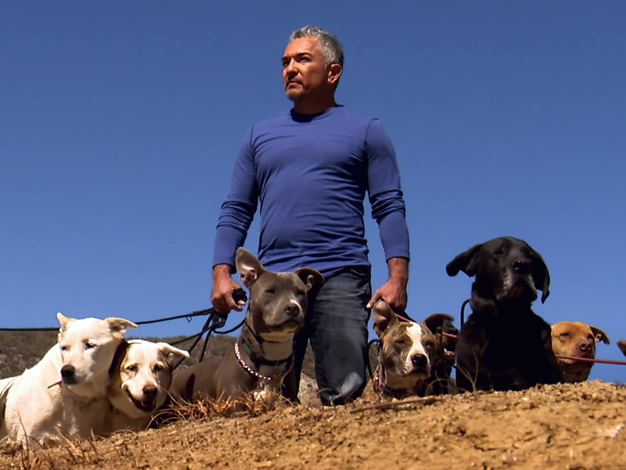 what is cesar millan doing now