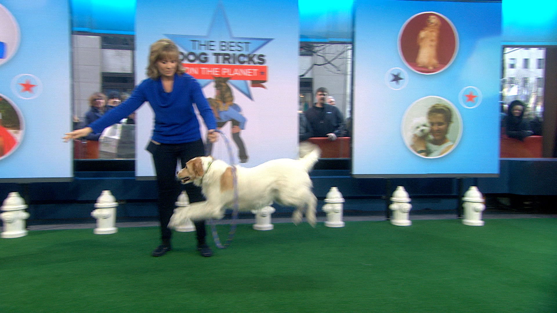 10 Fun, Impressive Tricks You Can Teach Any Dog - Dogtime