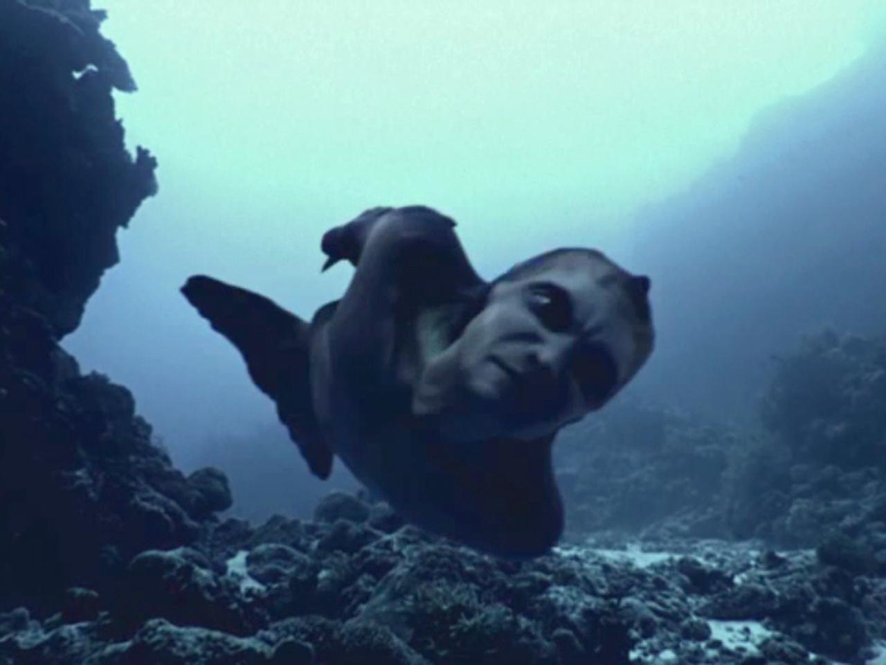 mermaid documentary smells fishy to critics today com