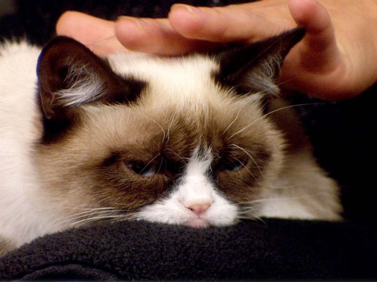 Meet Tardar Sauce The Grumpy Cat Gone Viral
