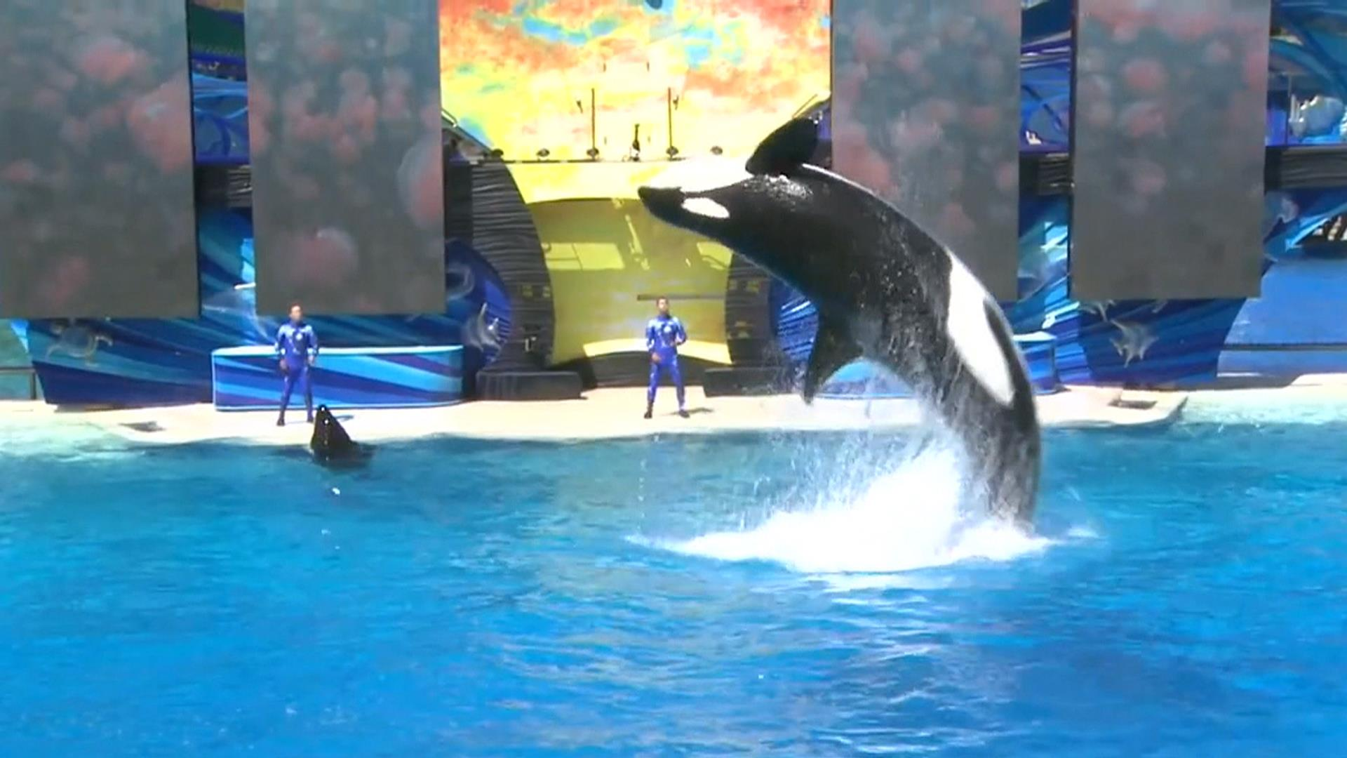 Tilikum, SeaWorld Killer Whale Featured in 'Blackfish' Documentary ...