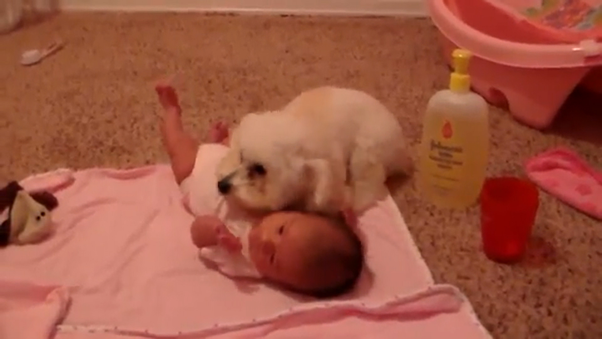 Adorable Puppy Protects Baby From Blow Dryer Todaycom