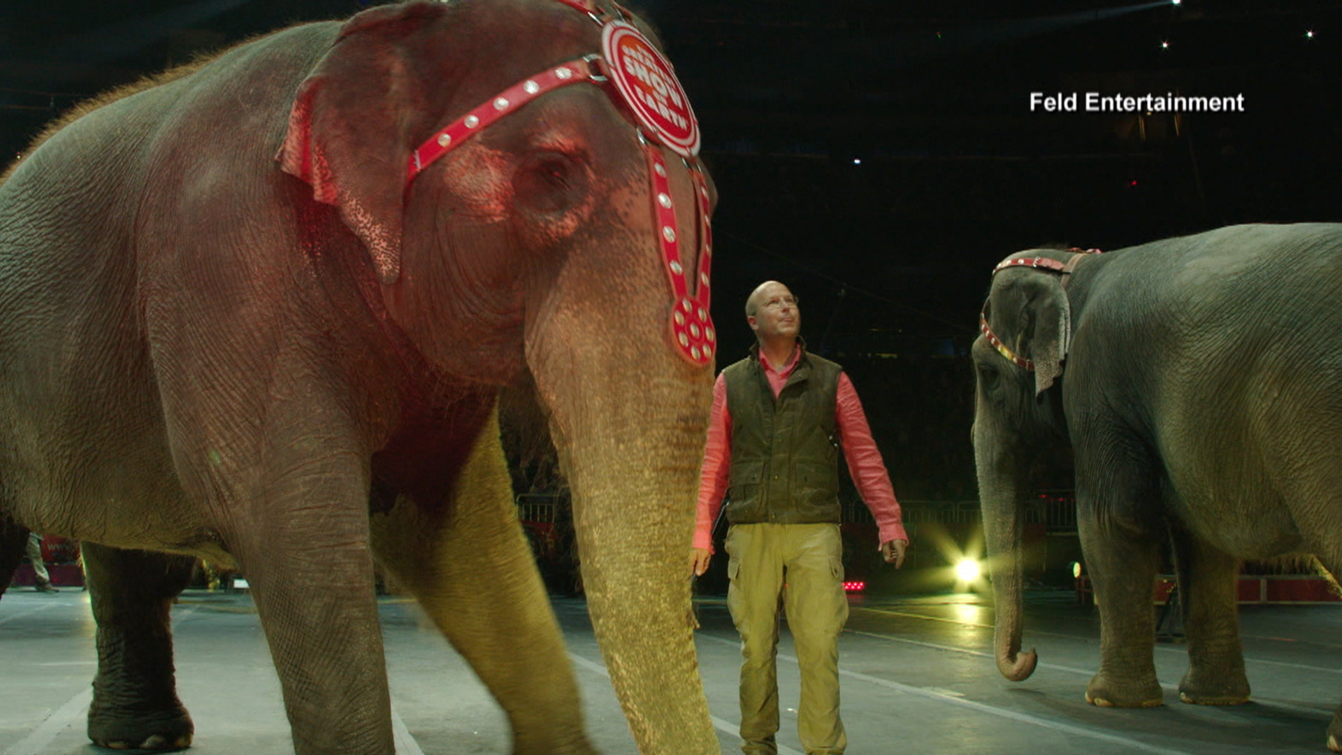 Ringling bros to retire all circus elephants in may 2 years early says iconic elephants will be retired early biocorpaavc Gallery