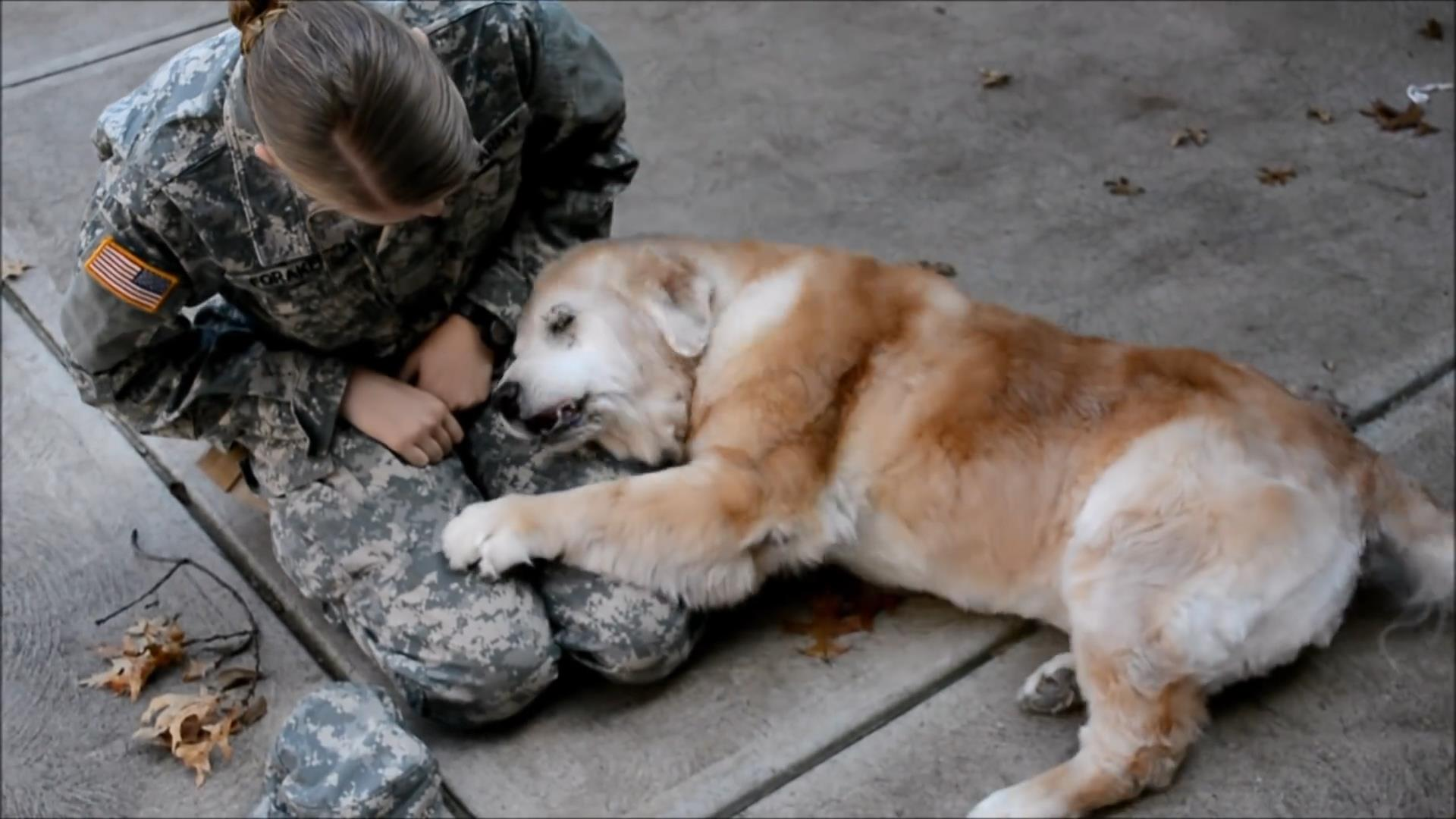 Soldier reunites with 13-year-old dog in heartwarming video