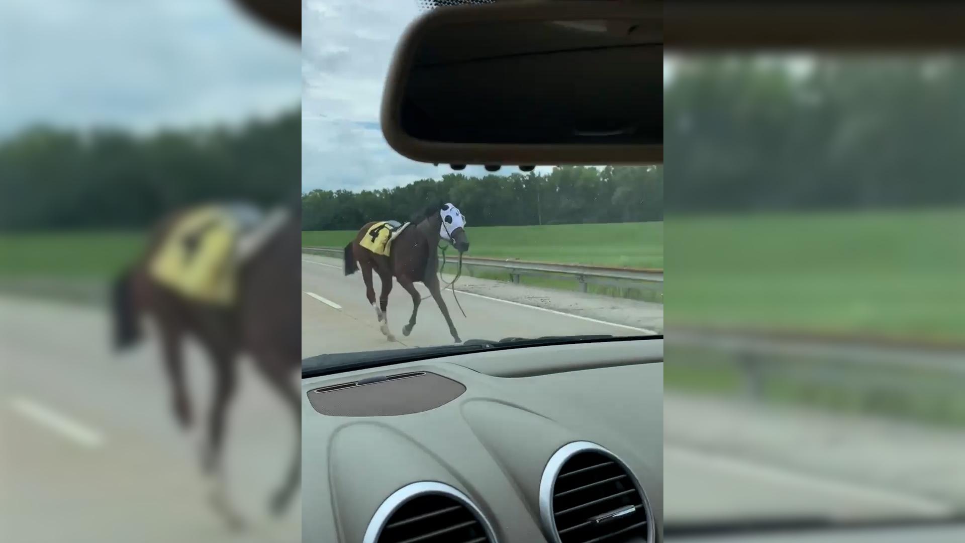 Horse escapes racetrack, runs down Kentucky highway
