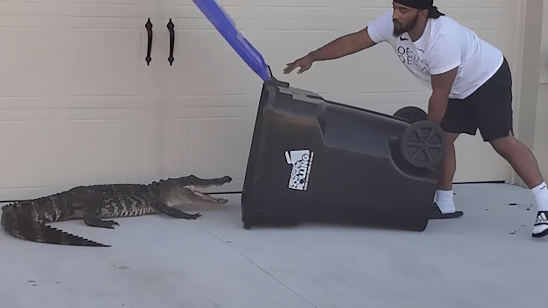 WATCH: Florida man captures alligator in trash bin
