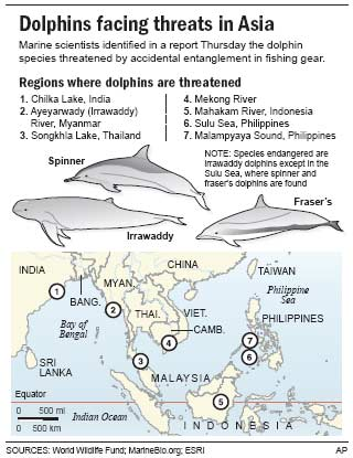 Nets Killing Off 10 Dolphin Porpoise Species Us News