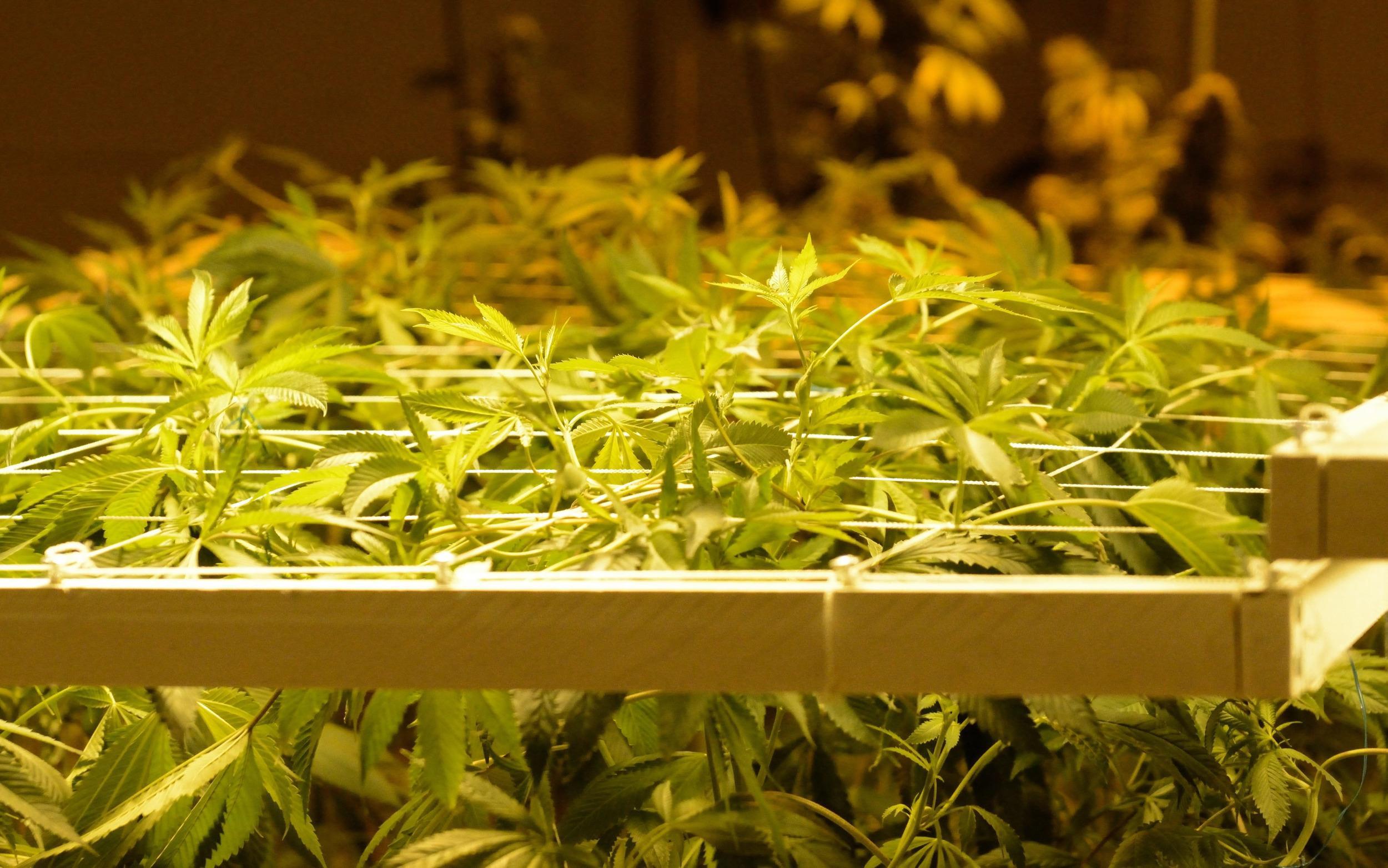 Image: Recreational Marijuana Sales Begin in Colorado