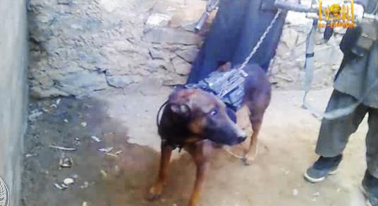 Footage released by the Taliban shows a dog they claimed they captured from US troops during fighting in eastern Afghanistan last December.
