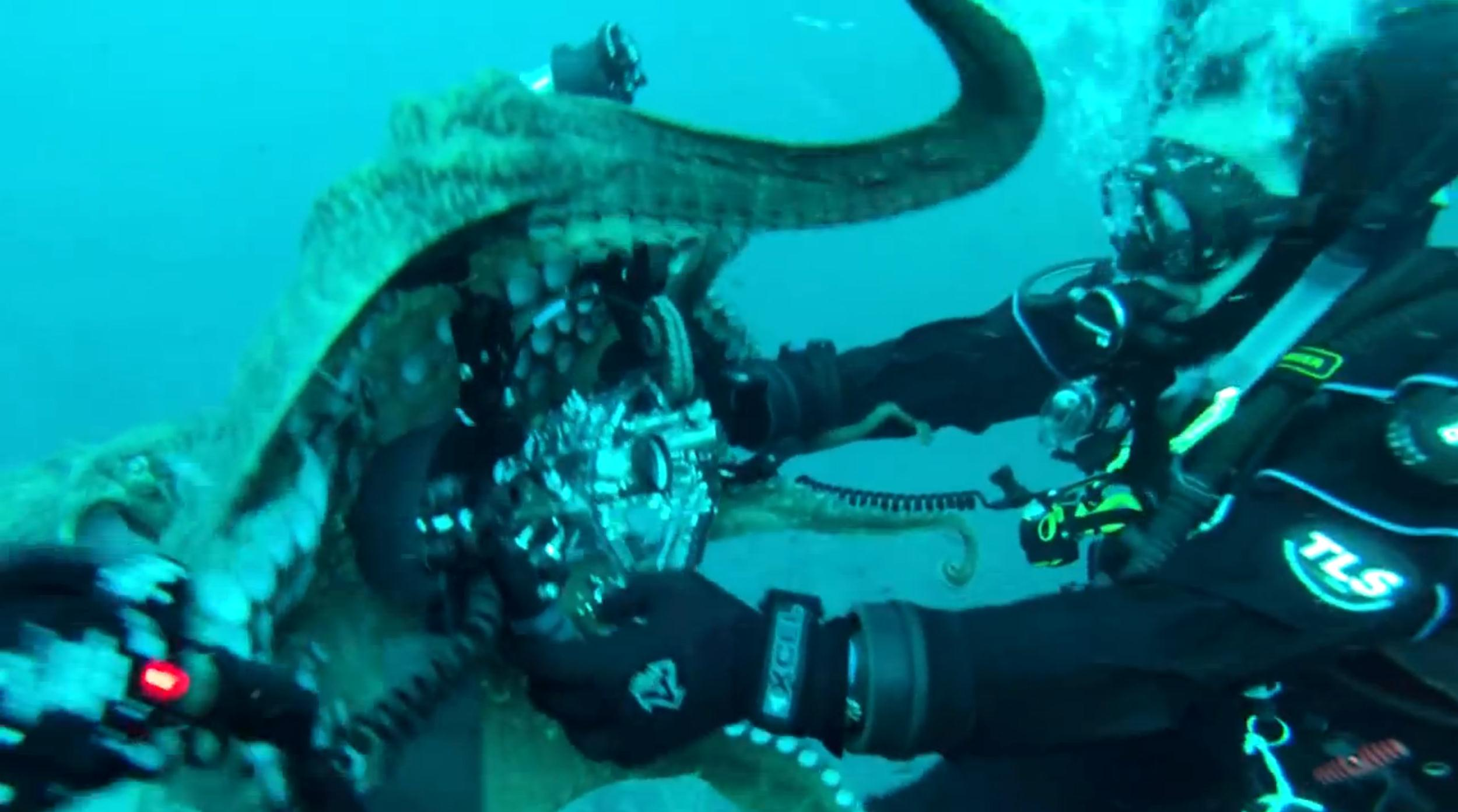 Image: Octopus tries to take camera from diver