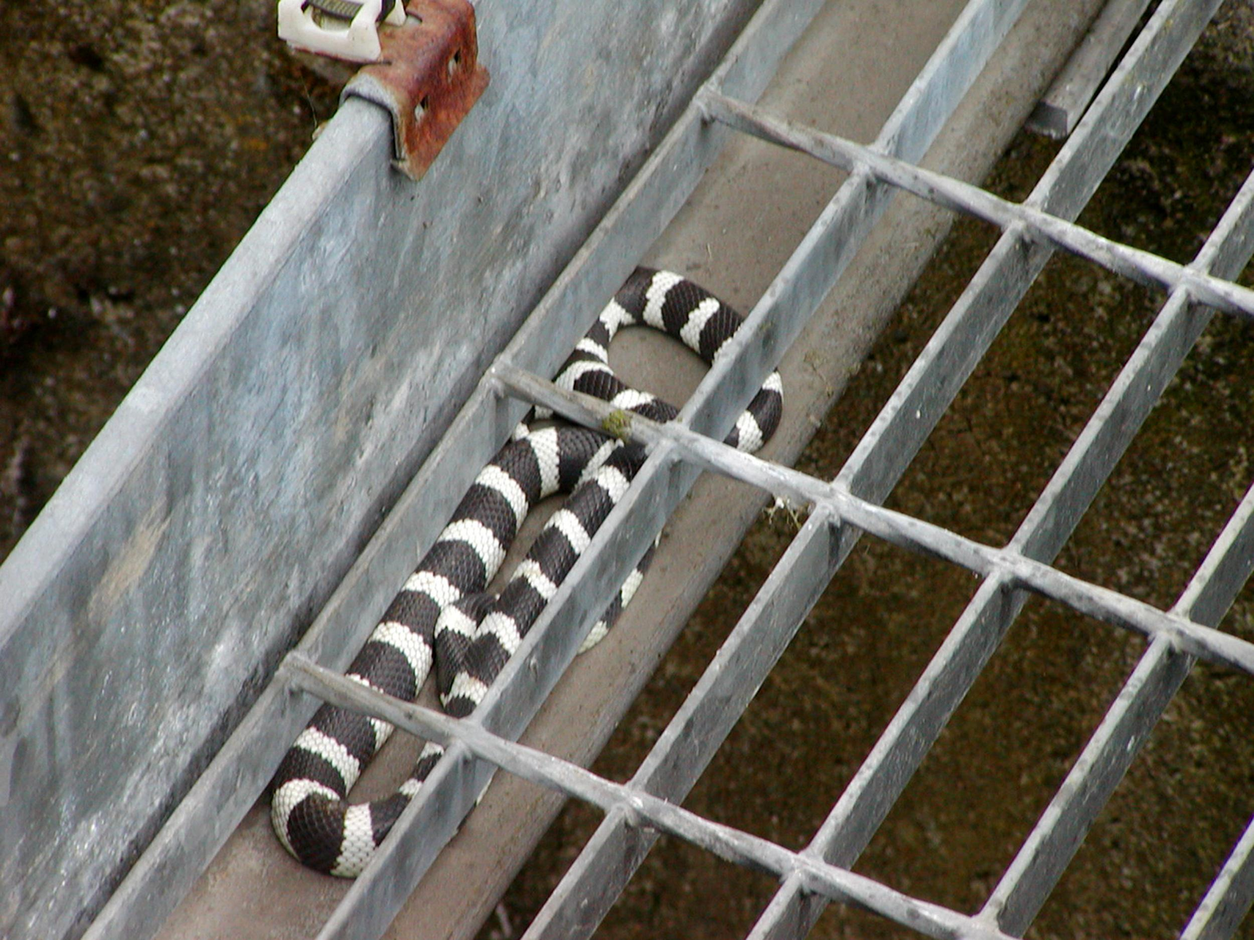 Image: Snake in the work Dunfermline