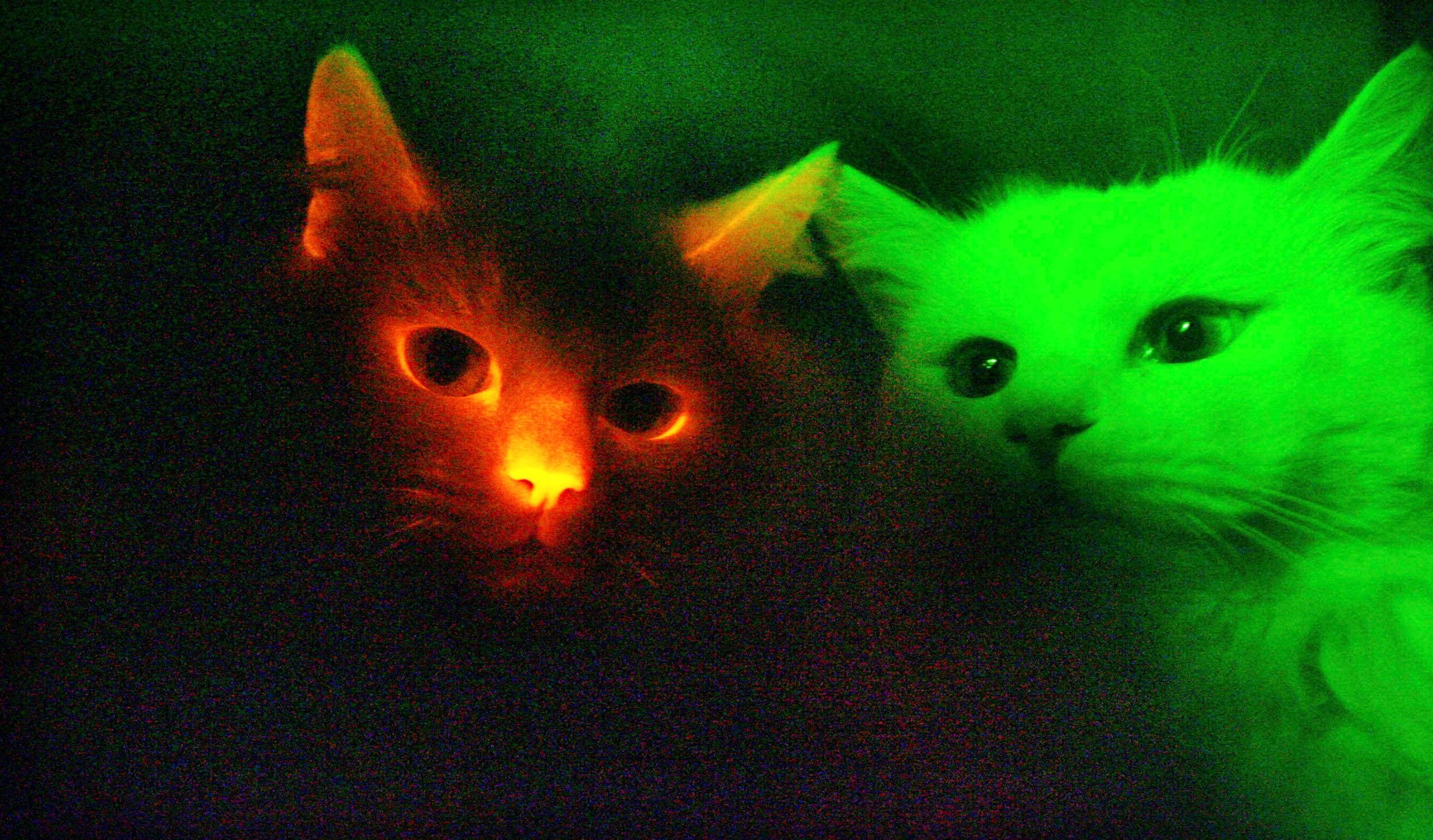 Color My World Cats and Dogs May See in Ultraviolet