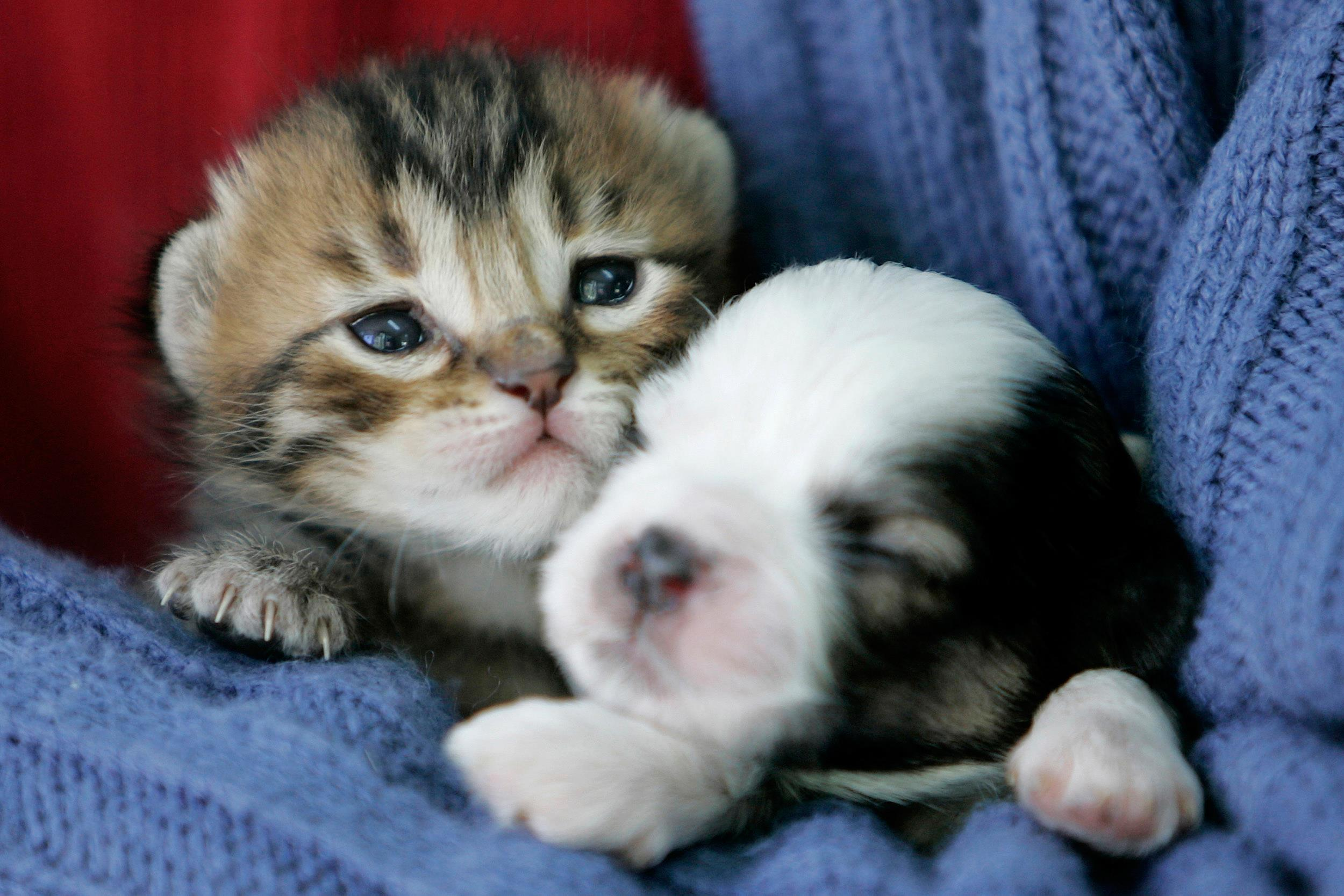Image: A kitten and puppy snuggle up together