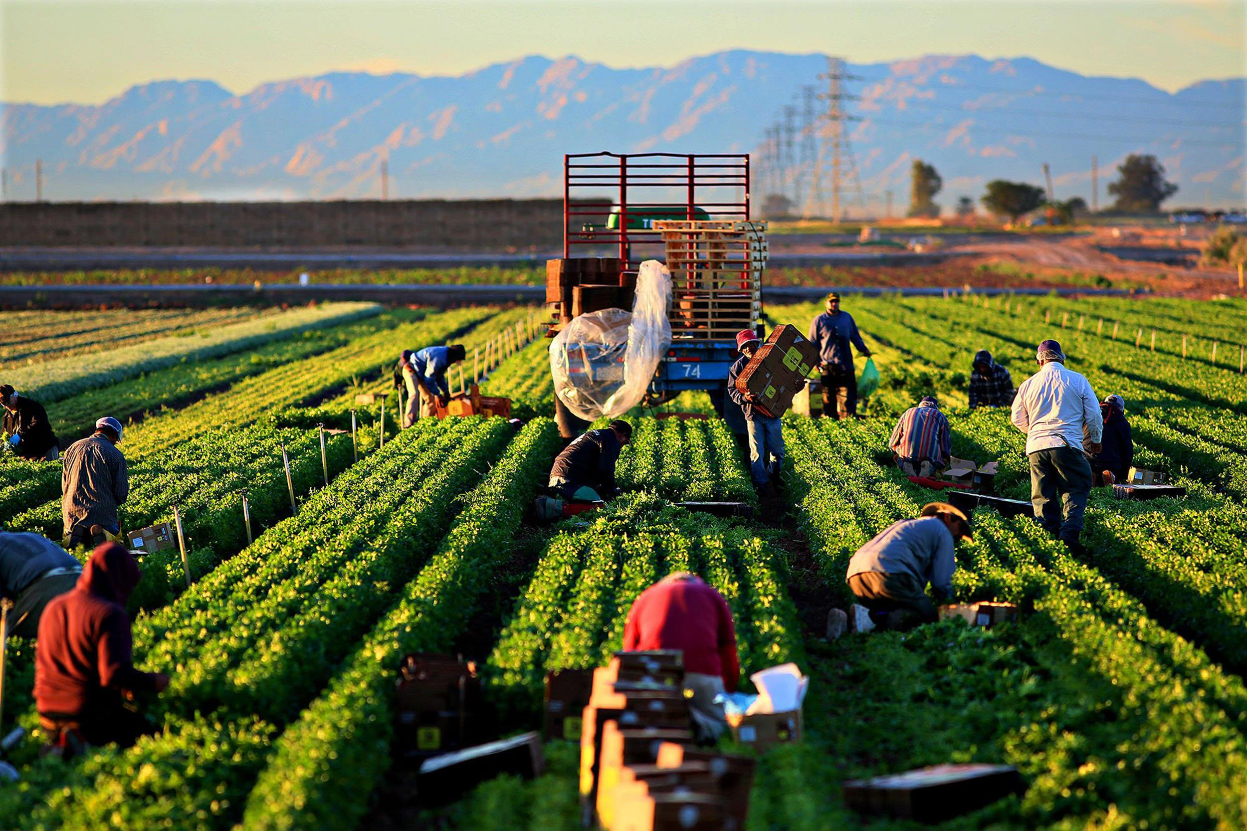 a mexican farmer worker in usa essay To some of us the chicano movement was a period of time chavez led the united farm workers the chicano movement, young mexican-american would.