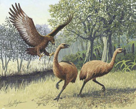 Image: Eagle attacking two New Zealand moa