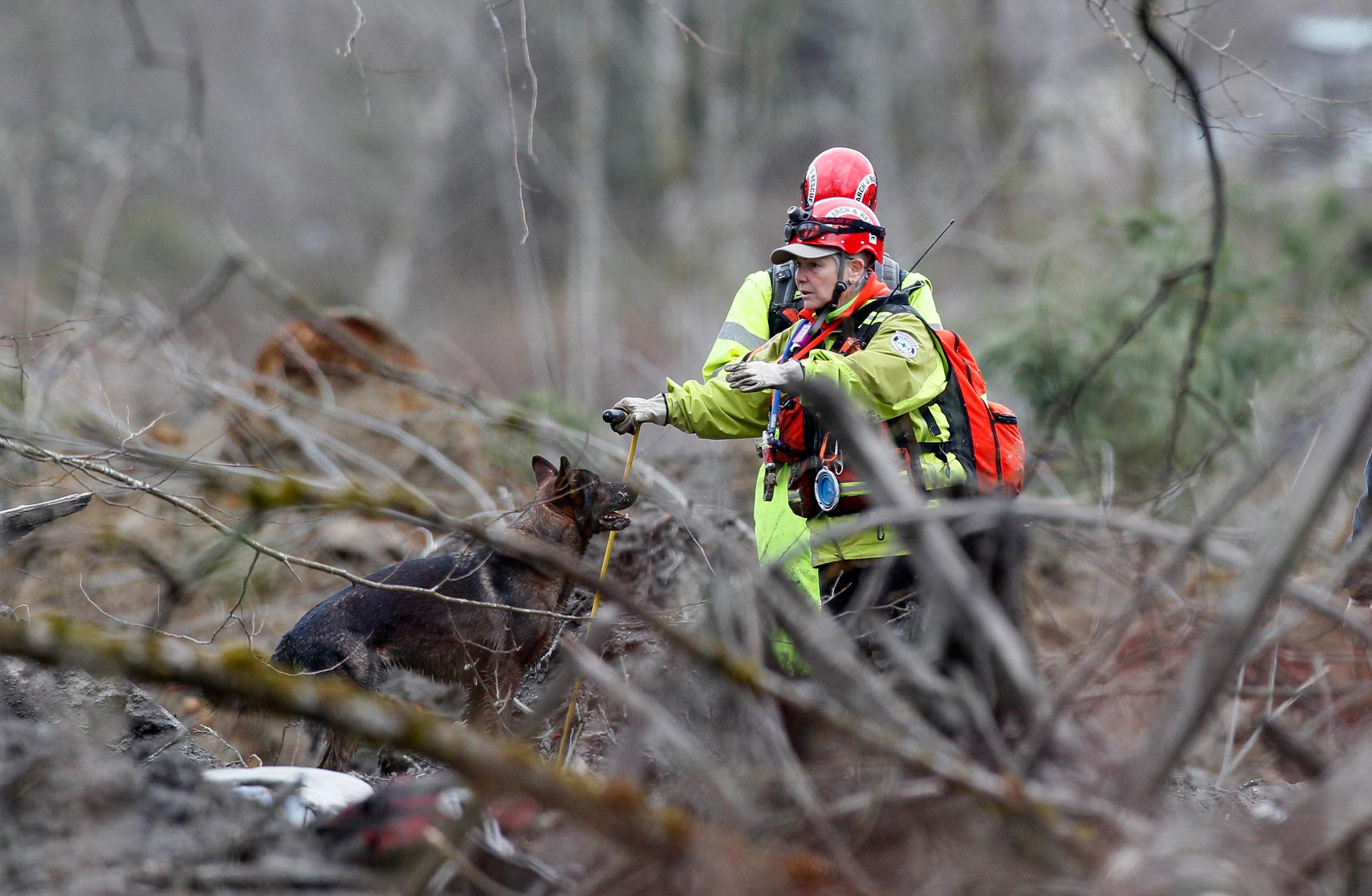 Image: A rescue worker with a search and rescue dog looks for a 3-month-old baby lost in the mudslide near Oso