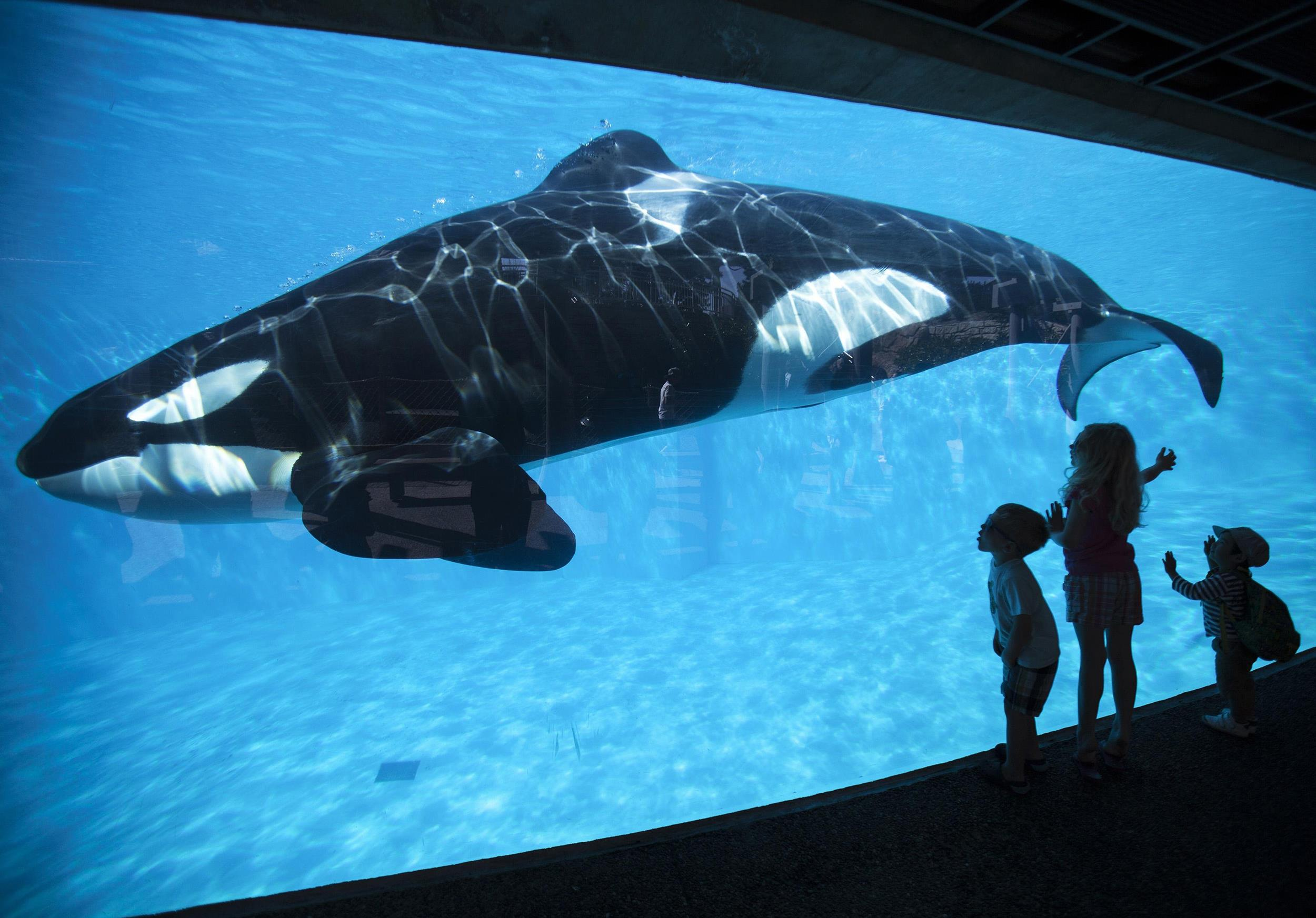 Image: File photo of children looking at an Orca killer whale at Sea World in San Diego