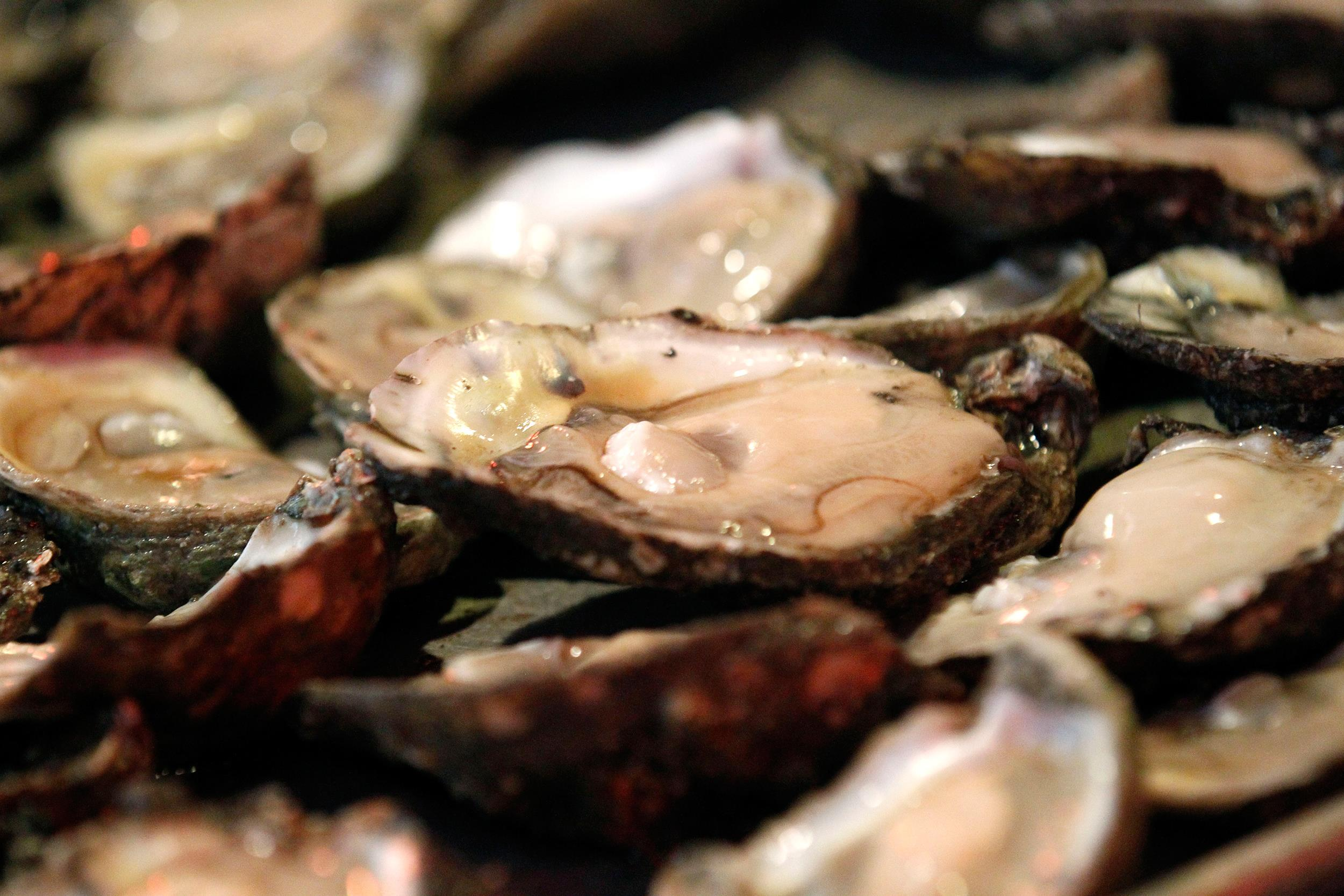 Image: Raw oysters