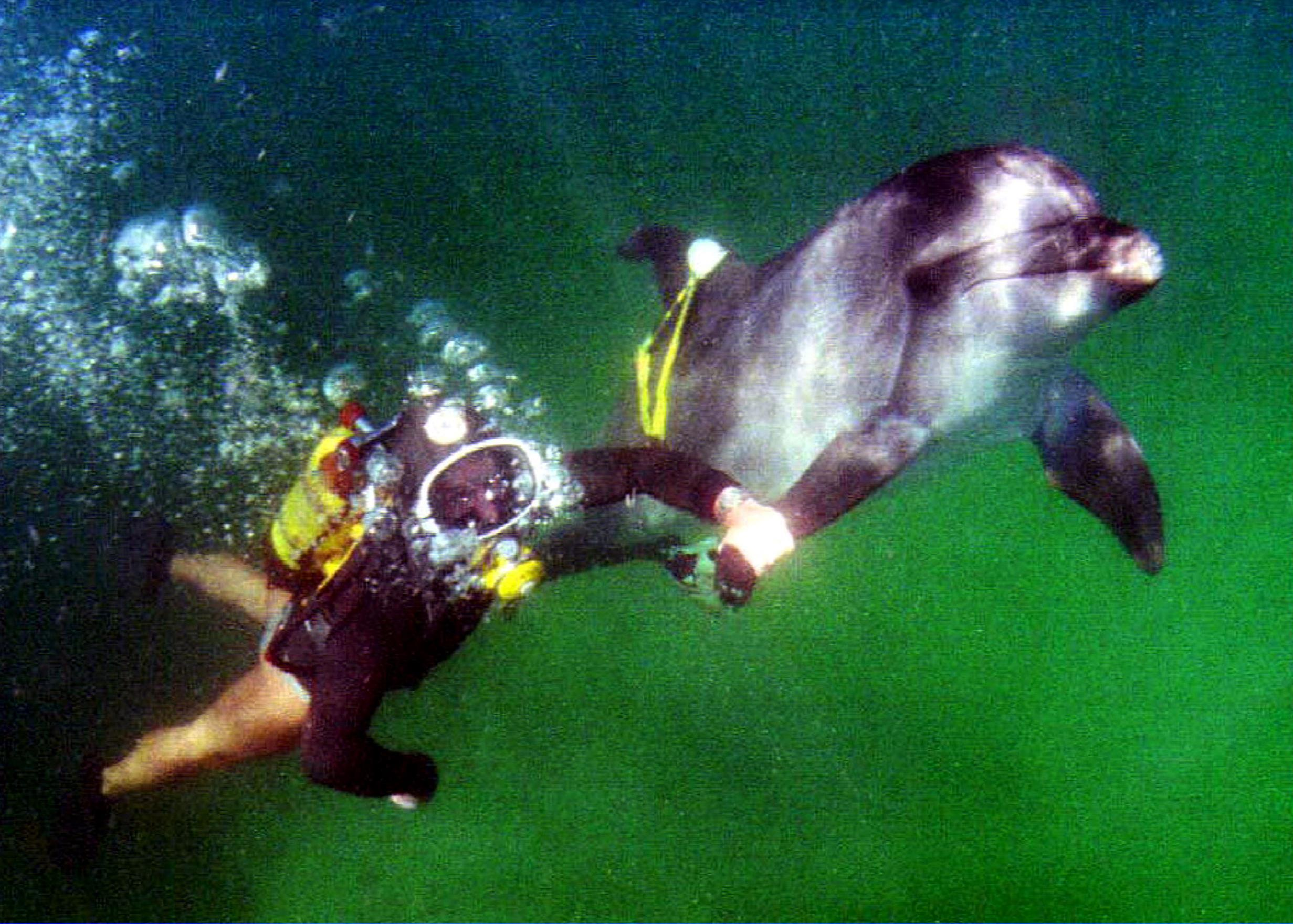 Image: A trainer works with a dolphin as part of a  military scientific research dolphinarium in Sevastopol