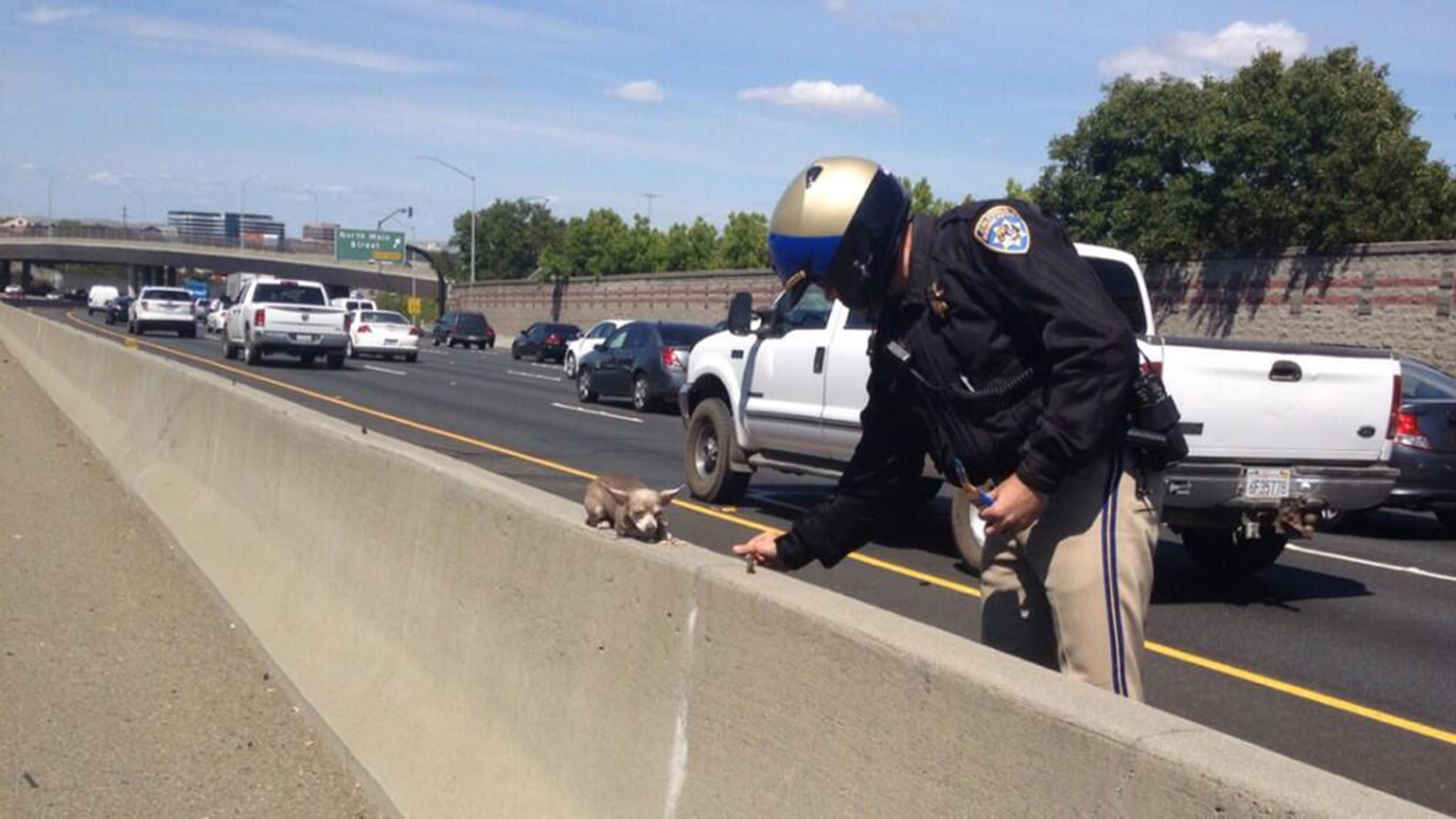 Image: A California Highway Patrol Officer tries to help a dog off a busy highway.