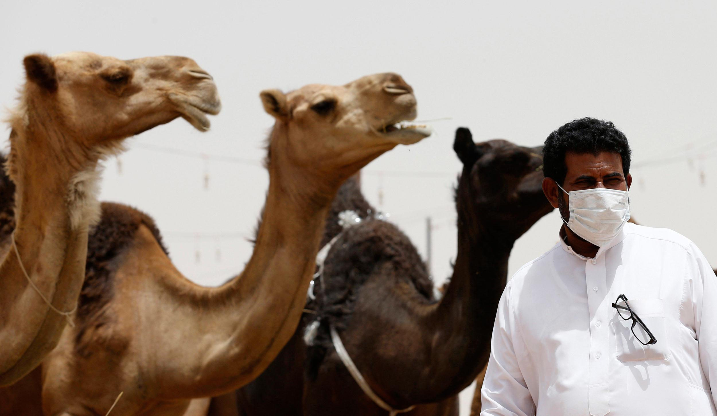 Image: A man wearing a mask looks on as he stands in front of camels at a camel market in the village of al-Thamama near Riyadh