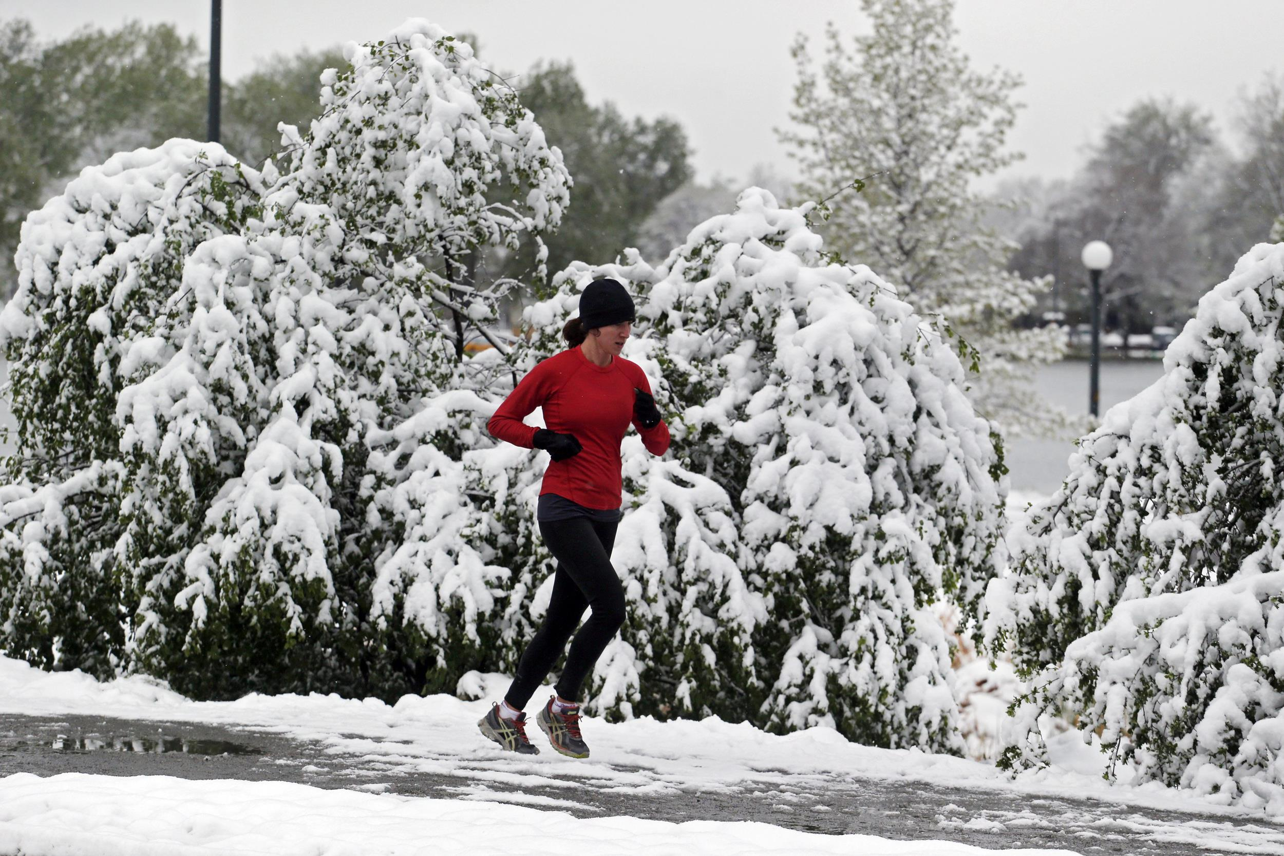 Image:Heavy snow weighs down trees and bushes as a woman runs in Washington Park in Denver