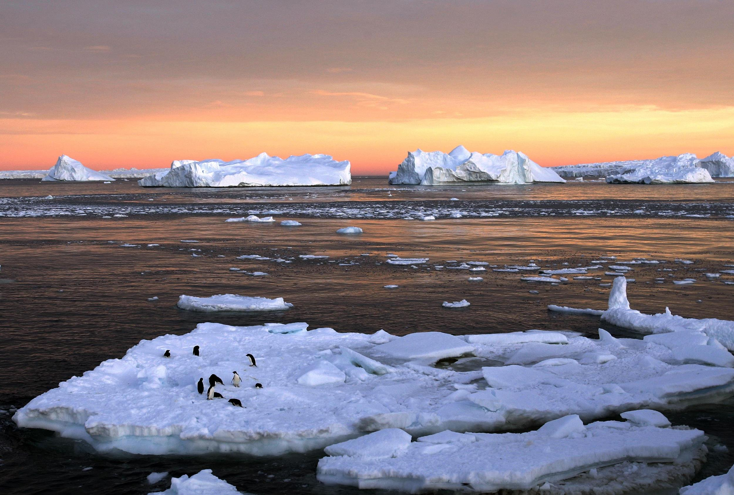 Image: Adelie penguins stand atop ice near the French station at Dumont d'Urville in East Antarctica