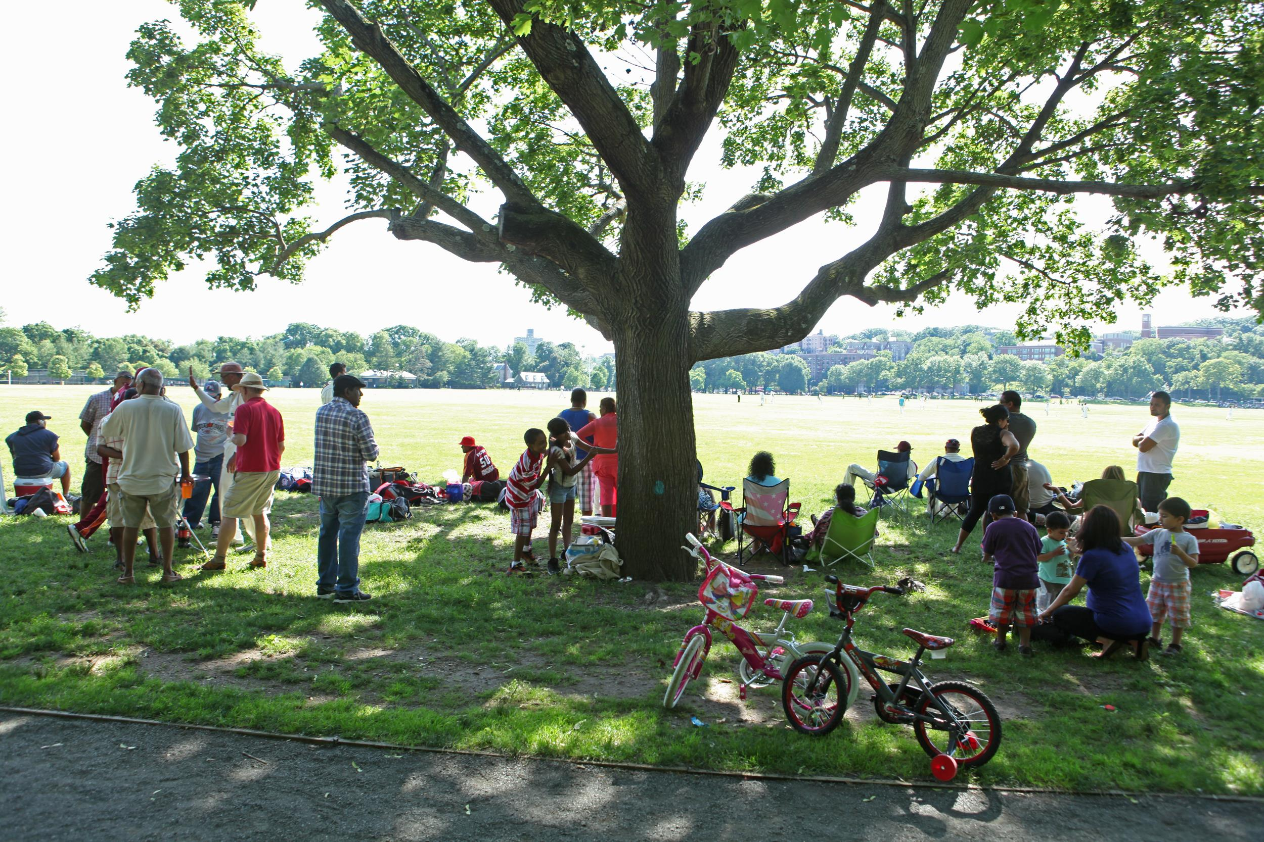 Cricket fans watch matches from the shade of a tree in Van Cortlandt Park in Bronx, N.Y., on June 15.
