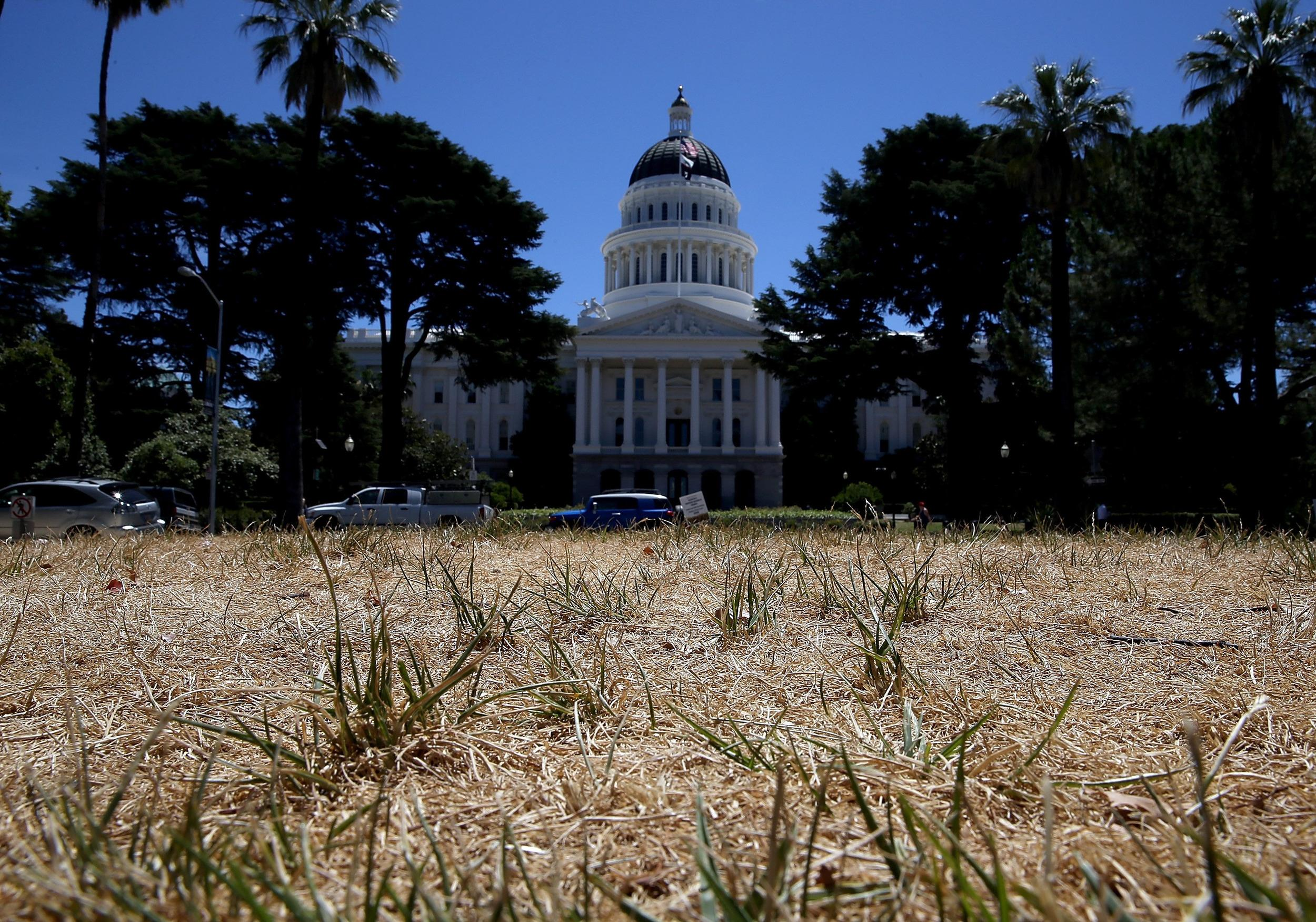 Water dowsers are in demand in California, where the drought has killed the lawn outside the state Capitol in Sacramento.