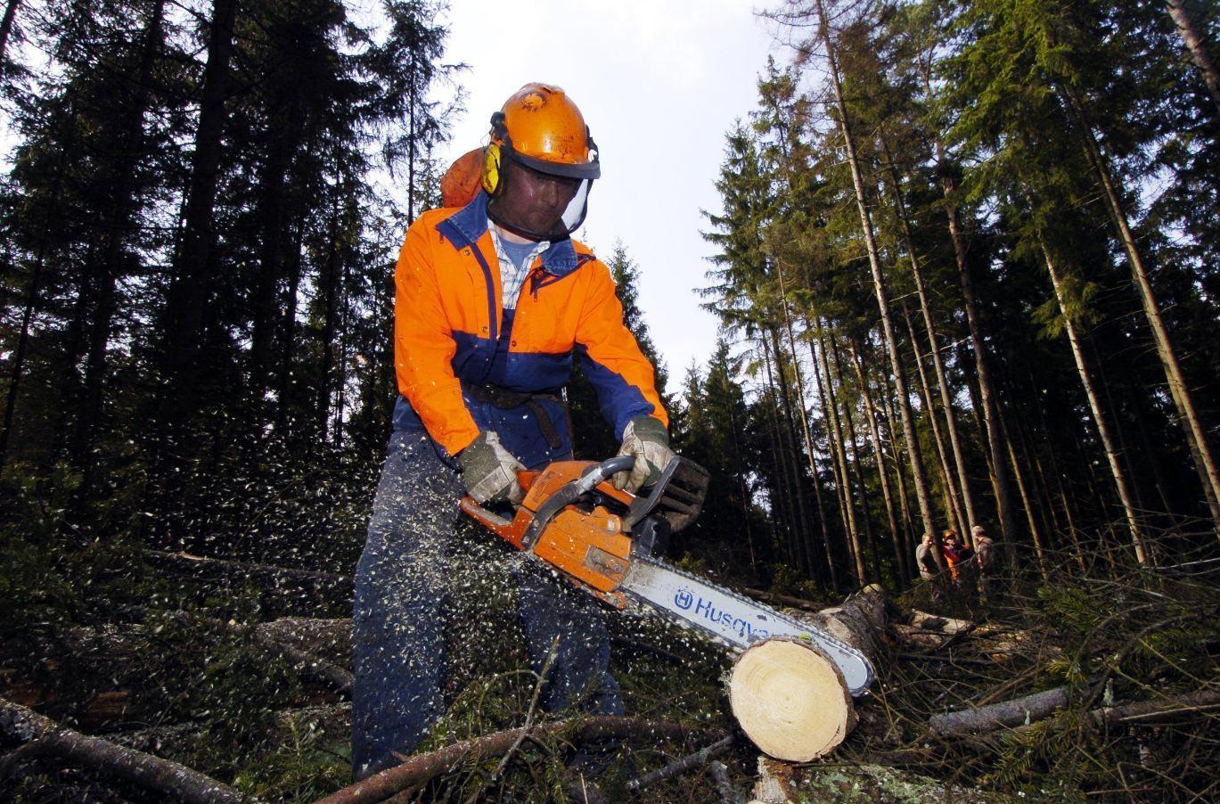 Lumberjack tree
