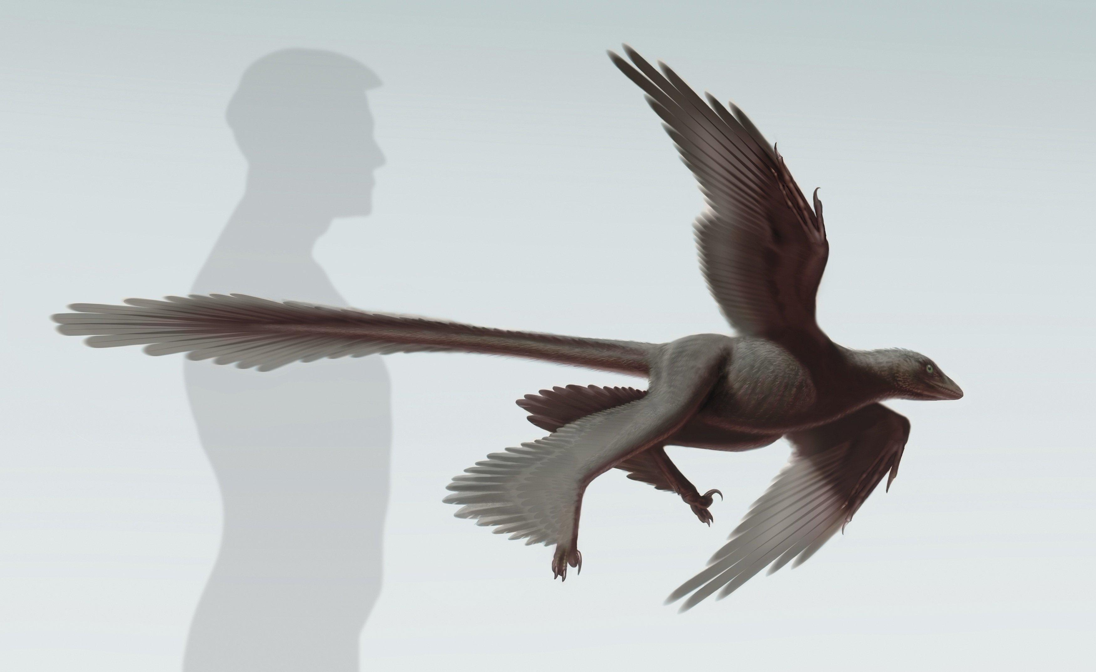 Image: Changyuraptor yangi