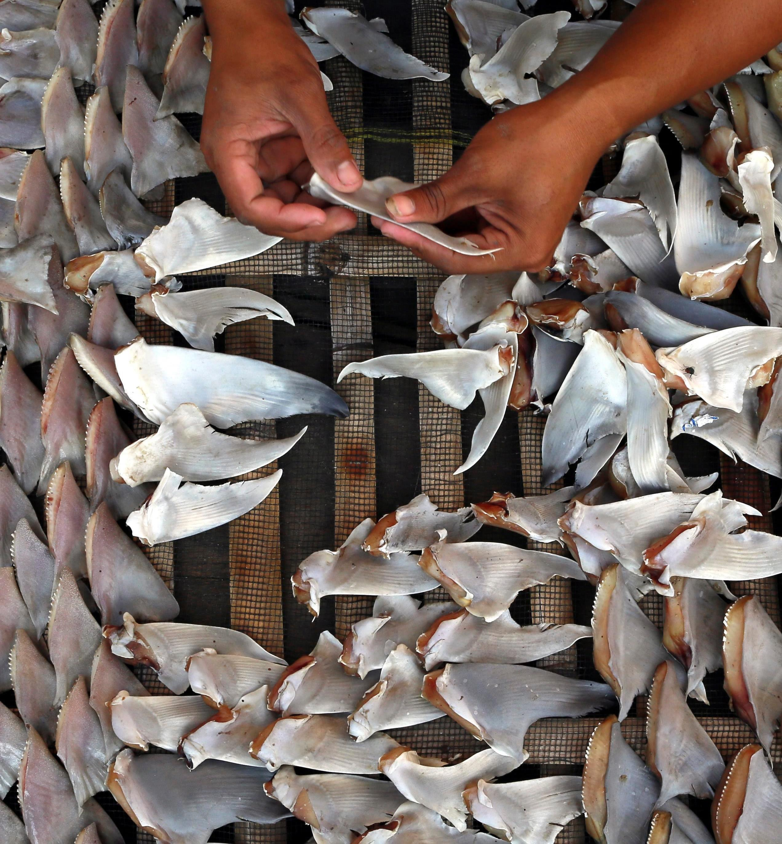 Image: Shark fins