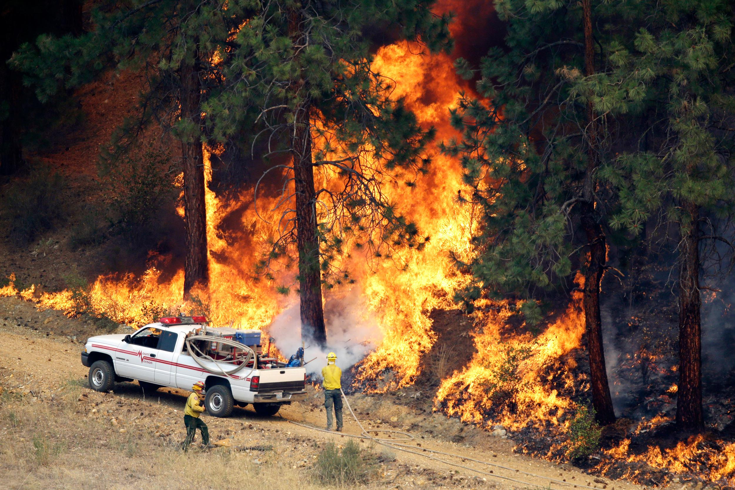 Image: A firefighter cools a tree in a line of fire in Winthrop, Wash.