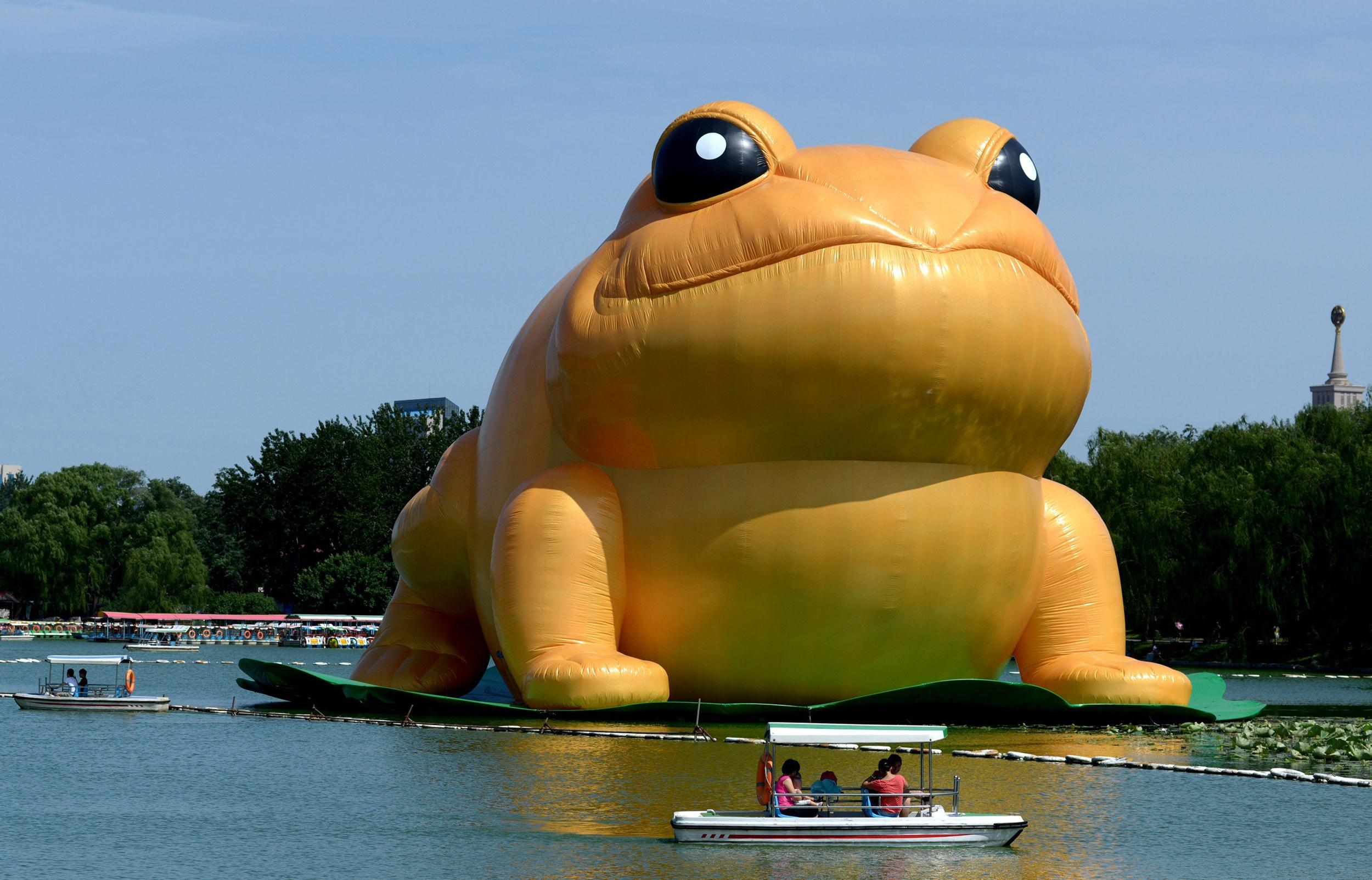 inflatable giant golden toad sparks internet crackdown in china